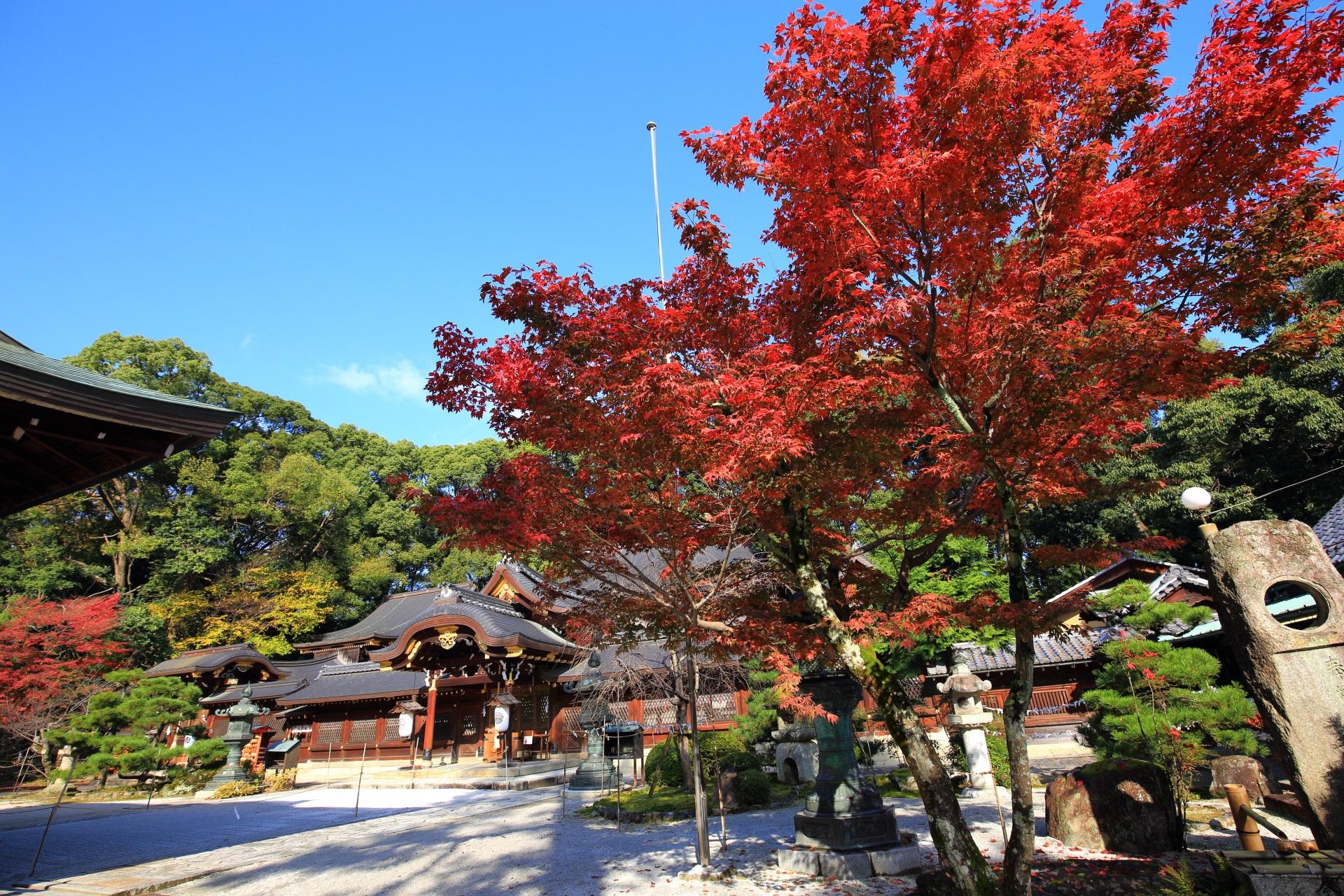 今宮神社の本殿と青空に映える鮮やかな紅葉
