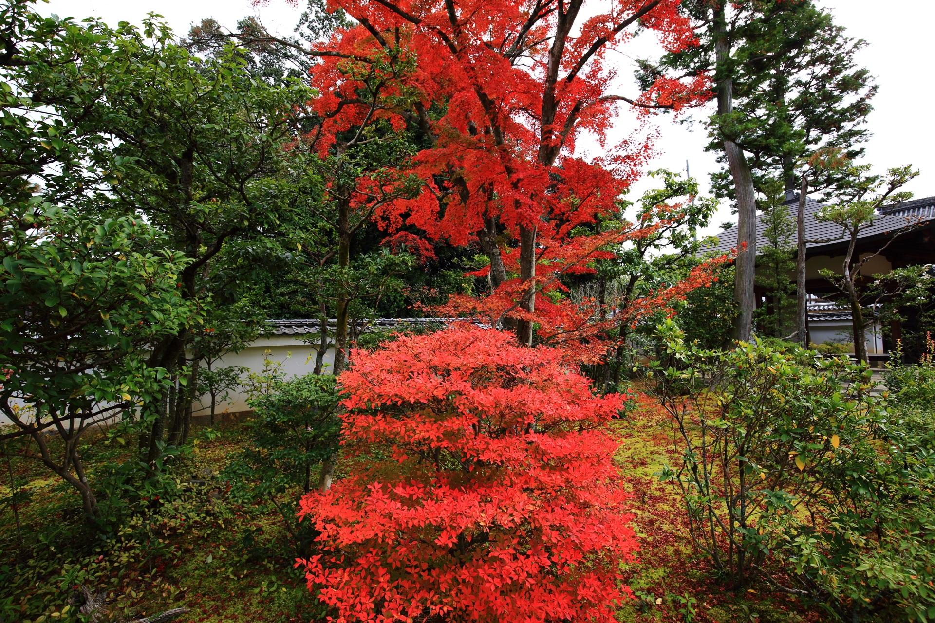 大法院の鮮やかな色合いのドウダンツツジの紅葉