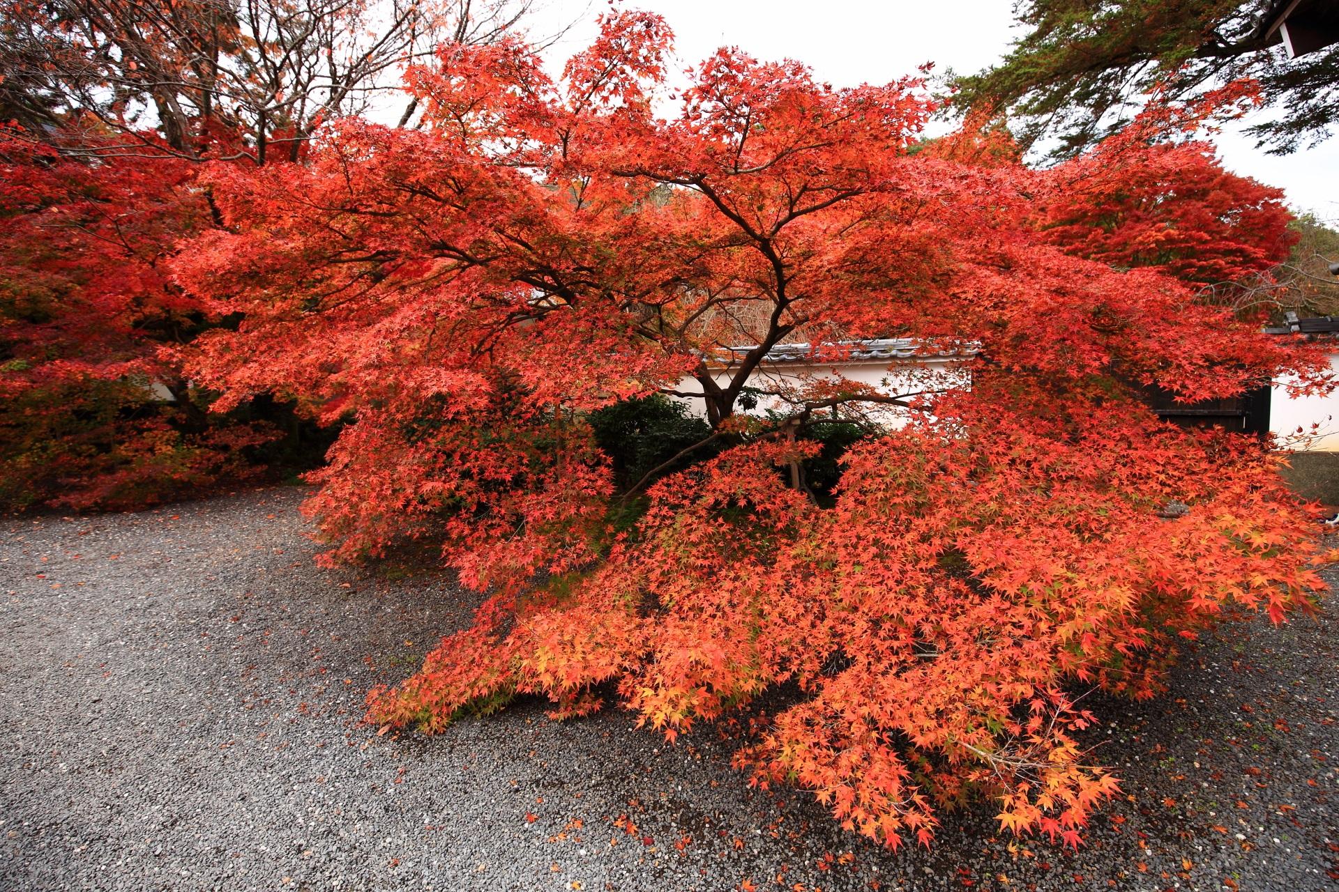実相院門跡の山門を入ったあたりの優雅に色づく紅葉