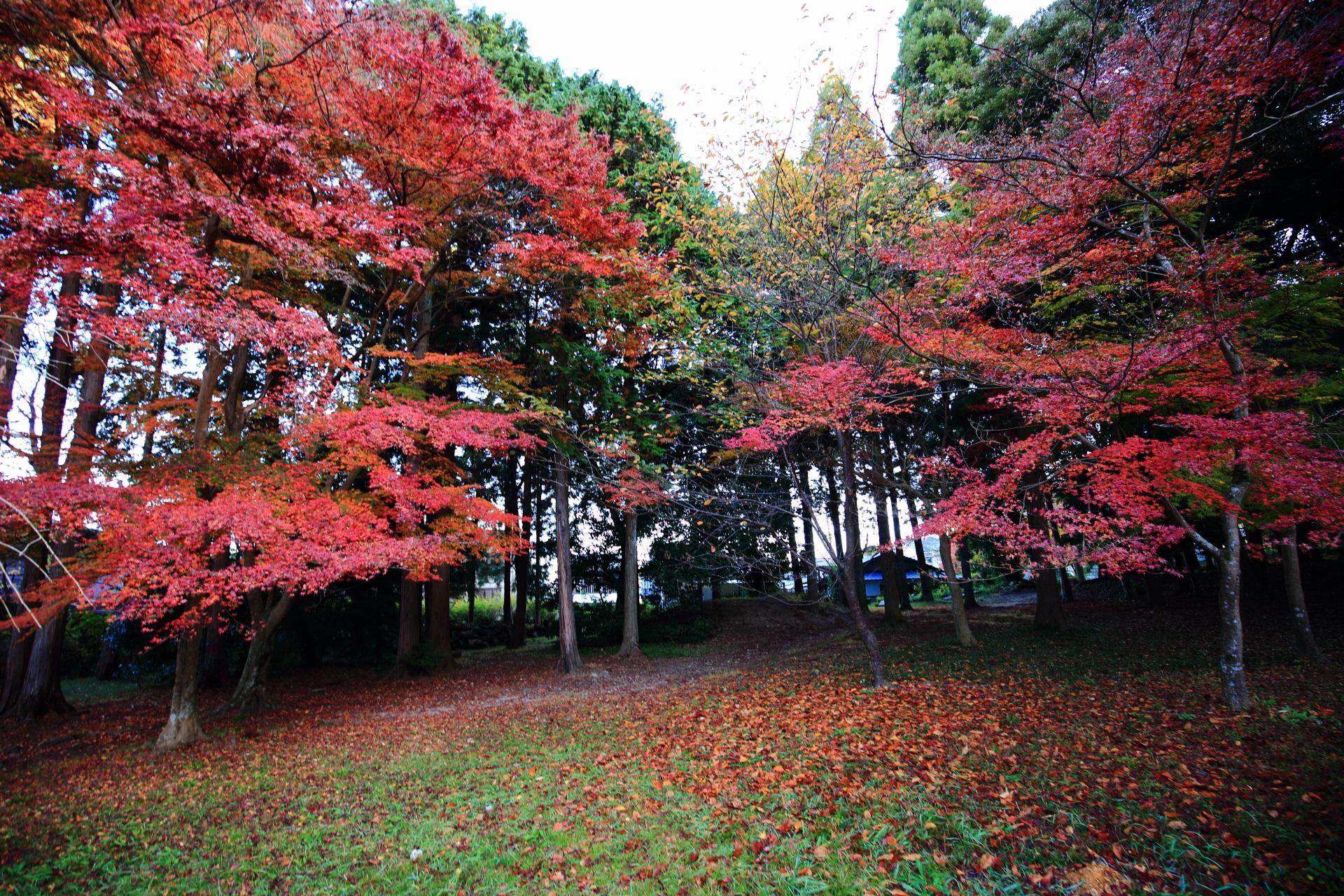 鷺森神社の緑の木々や芝生を彩る立派な紅葉