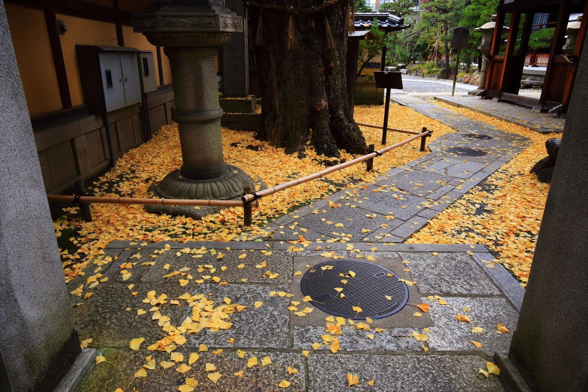 石畳の参道を染める上品な散り銀杏