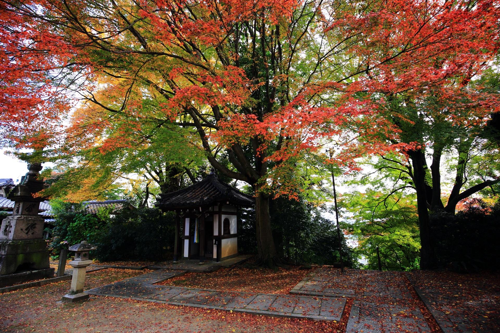 緑が残るも淡い秋の空間