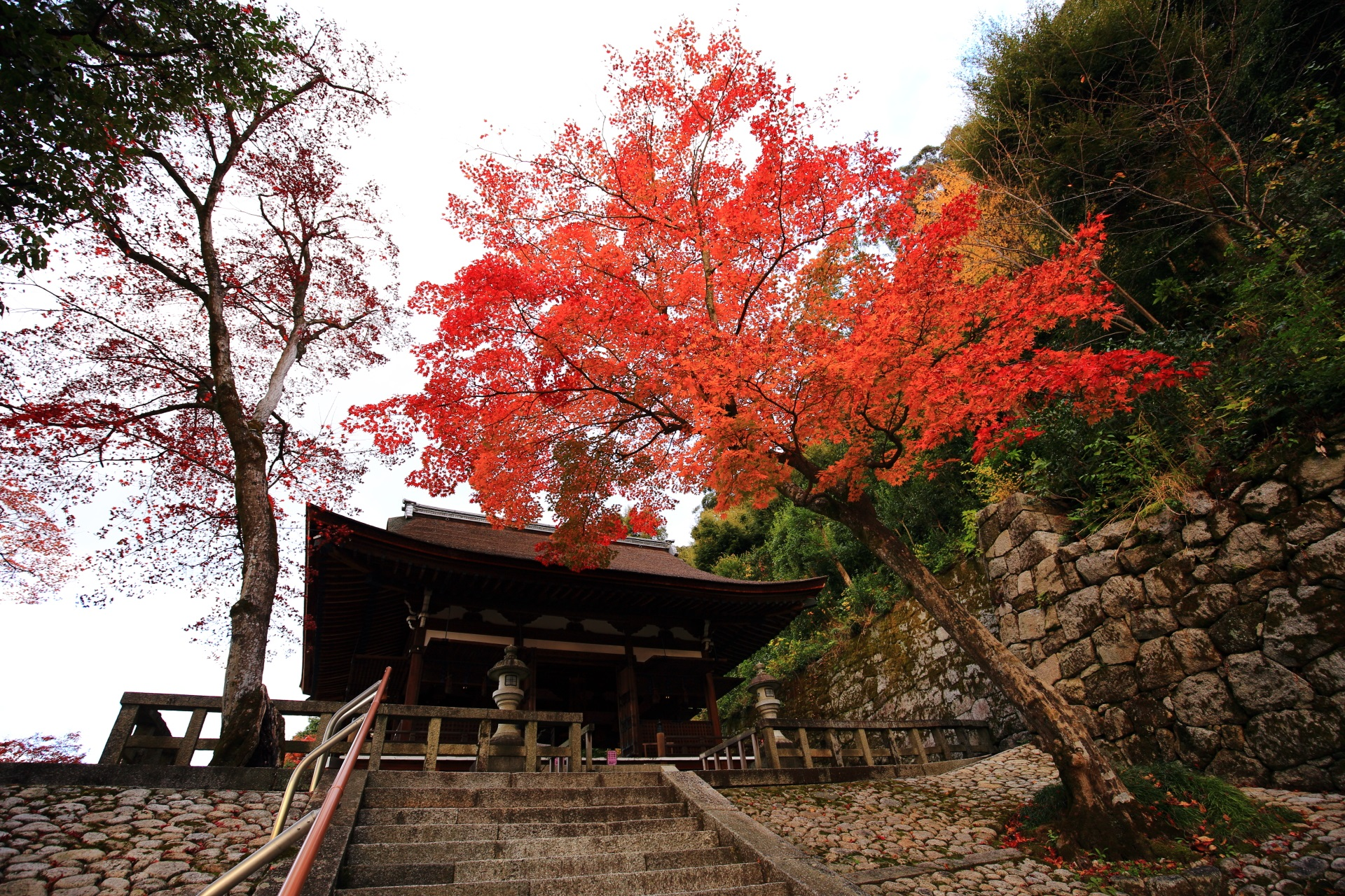 Kyoto Chionin-Temple Onbyo autumn leaves