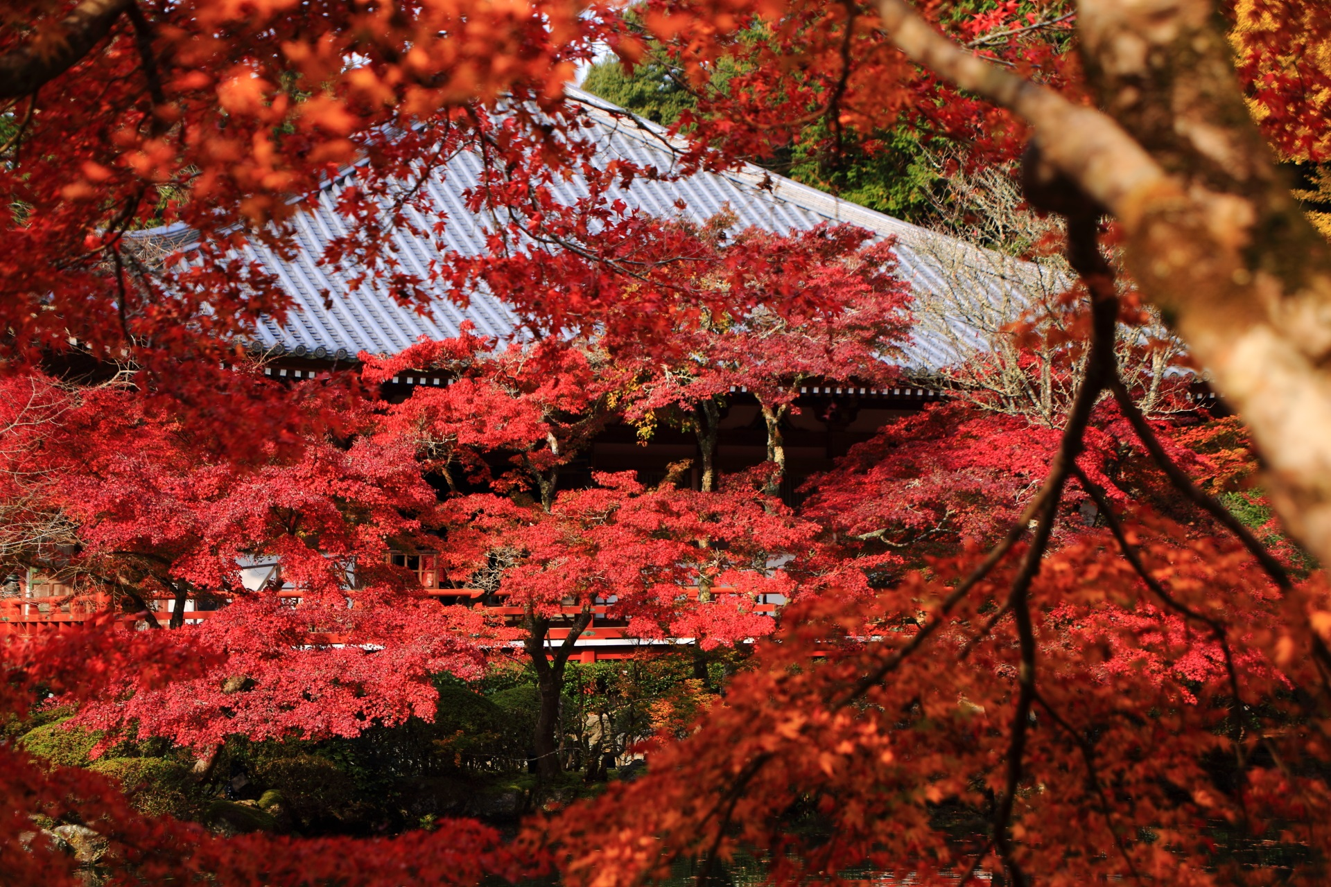 Kyoto Daigoji-Temple red colored leaves