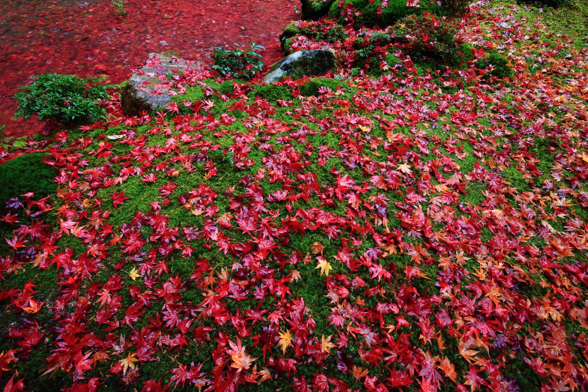 高画質 南禅院 散り紅葉 写真