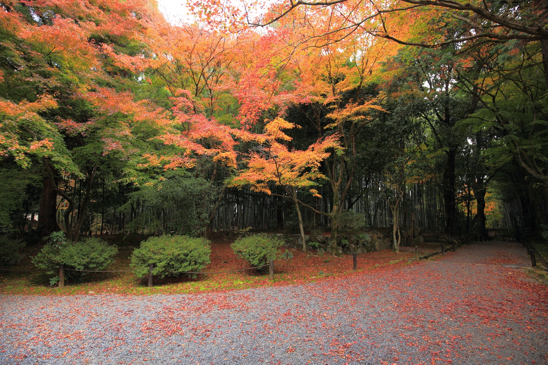 地蔵院の深い緑の竹と柔らかな紅葉の情緒ある秋の風景