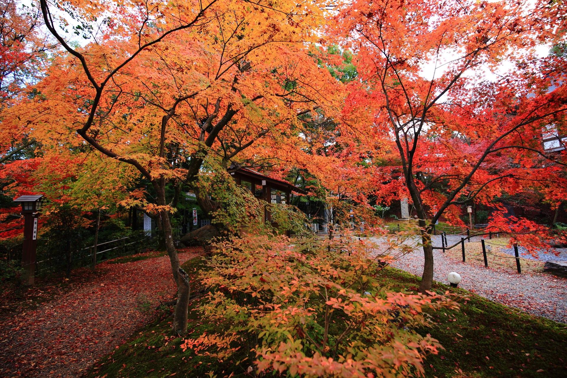 圧巻の紅葉につつまれた晩秋の長岡天満宮
