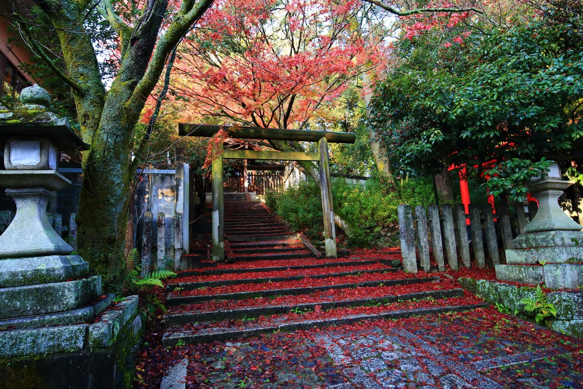 今宮神社の月読社と地主稲荷社前の散り紅葉で赤く染まる石畳の石段