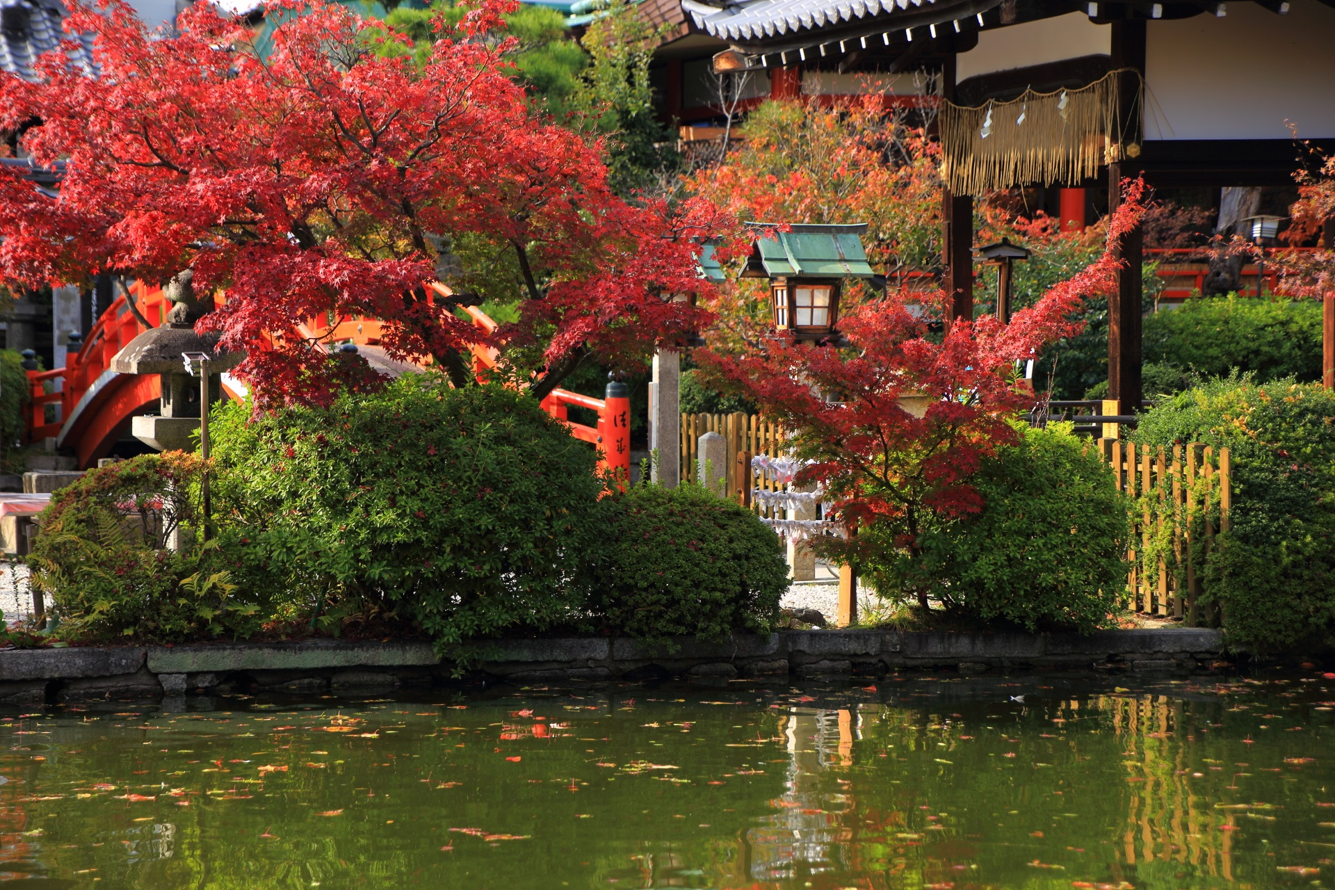 Kyoto Shinsenen-Temple colored leaves