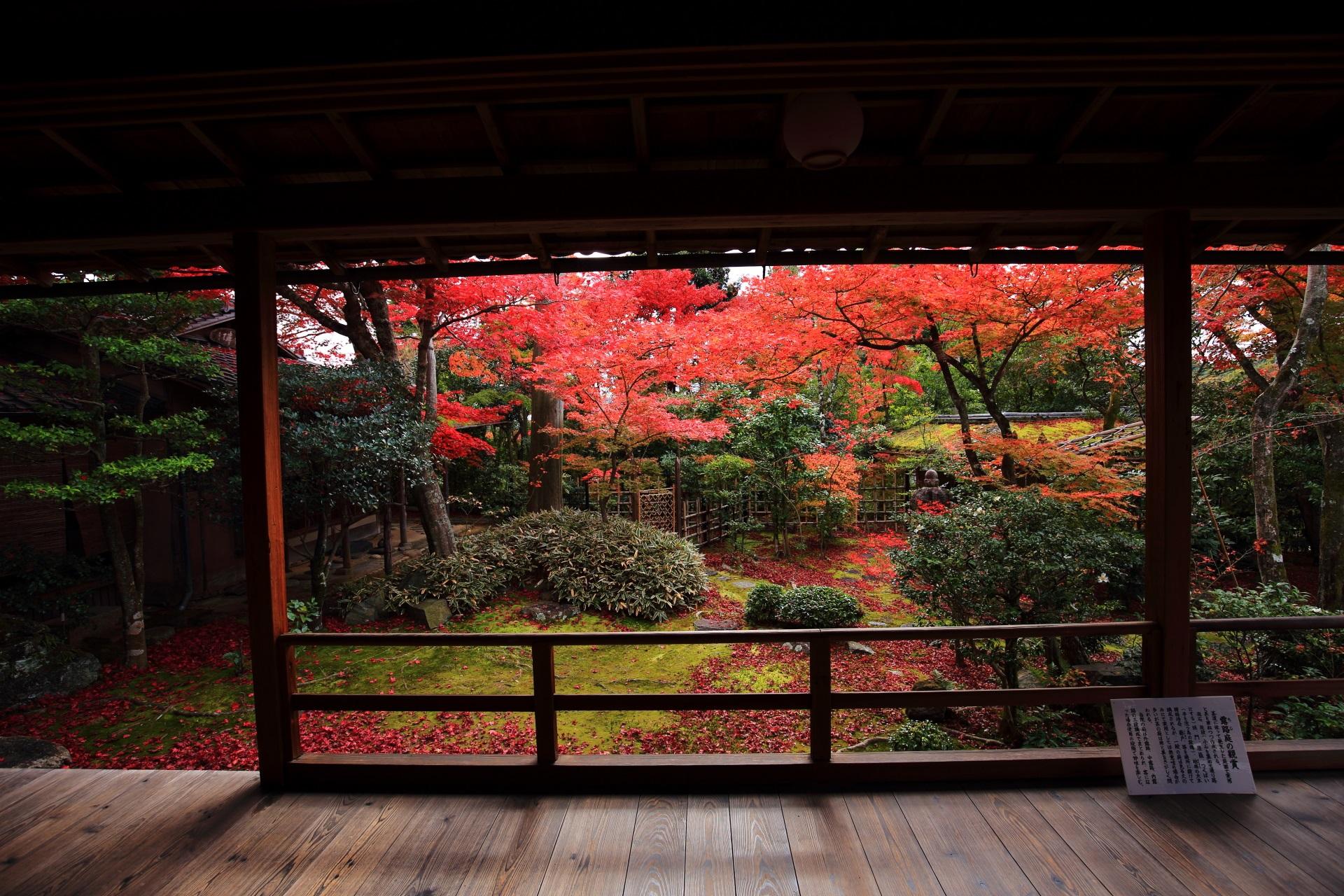 落ち着いた庭園でほのかに光るような鮮やかな紅葉