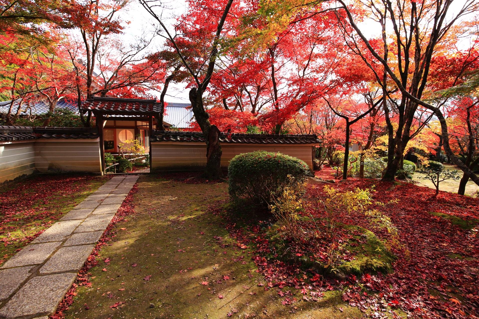 多彩な秋が広がる勝持寺の本堂付近の紅葉