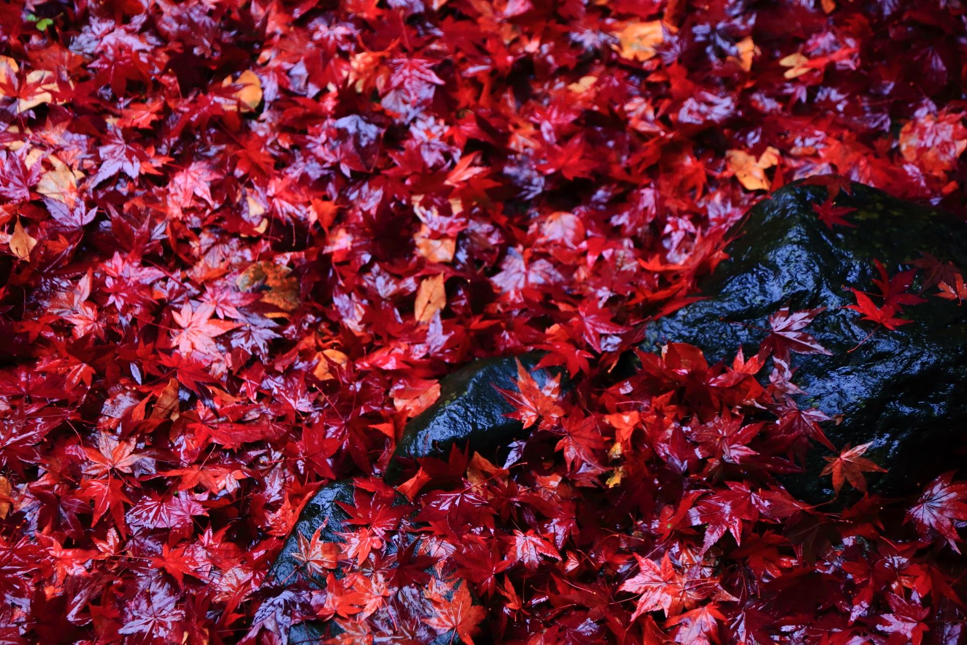 息をのむ深い秋の彩り