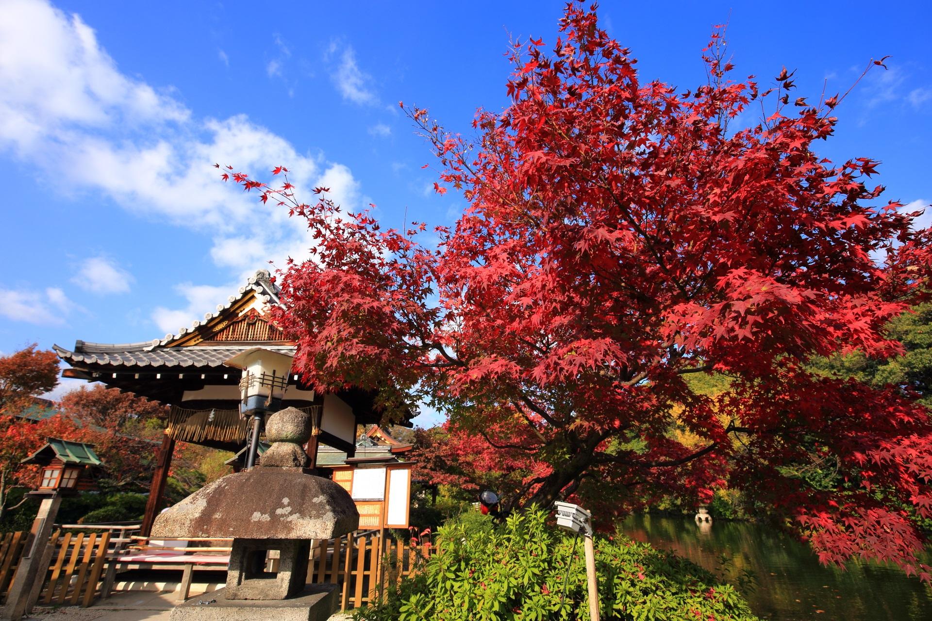 神泉苑の善女竜王社と青空を鮮やかに染める絶品の紅葉