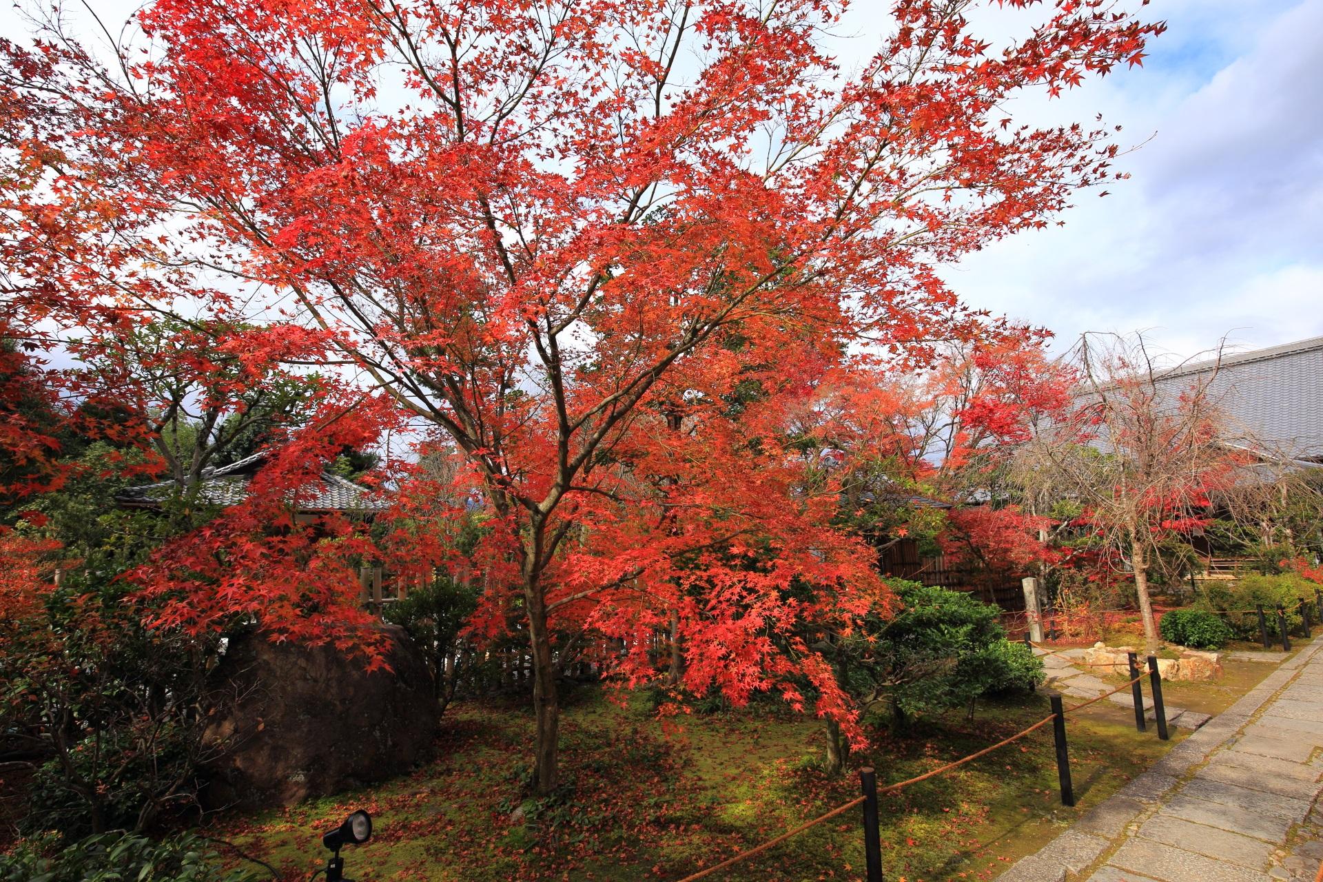 大法院の空を覆うような優雅な紅葉