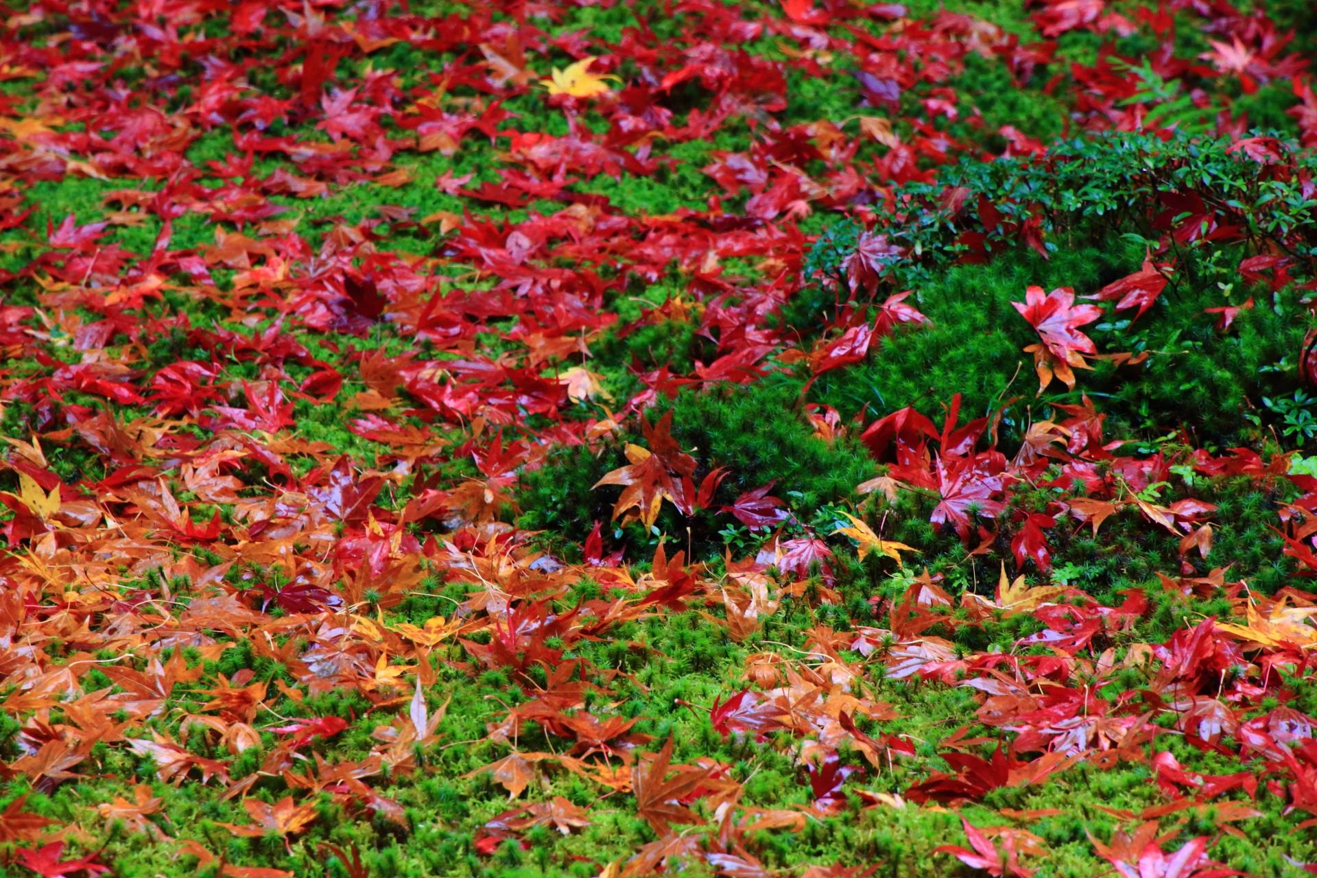 柔らかな苔に散る華やかでしっとりとした紅葉