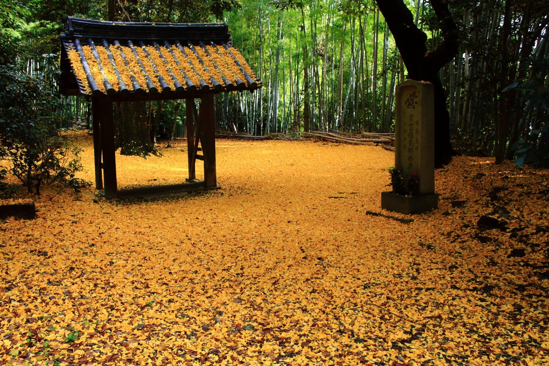 高画質 写真 山崎聖天 散り銀杏