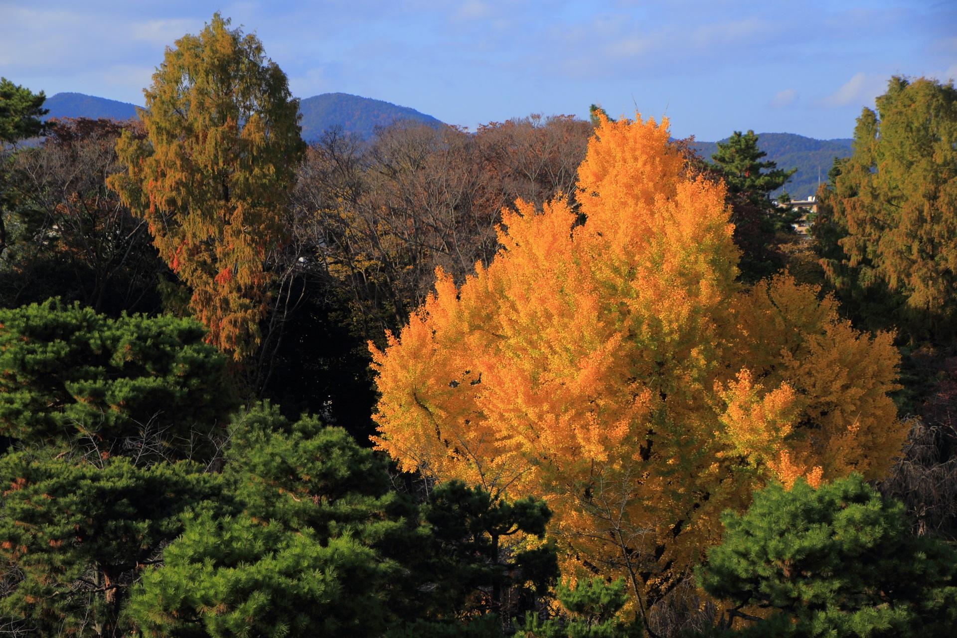 秋の城内を煌びやかに華やぐ銀杏