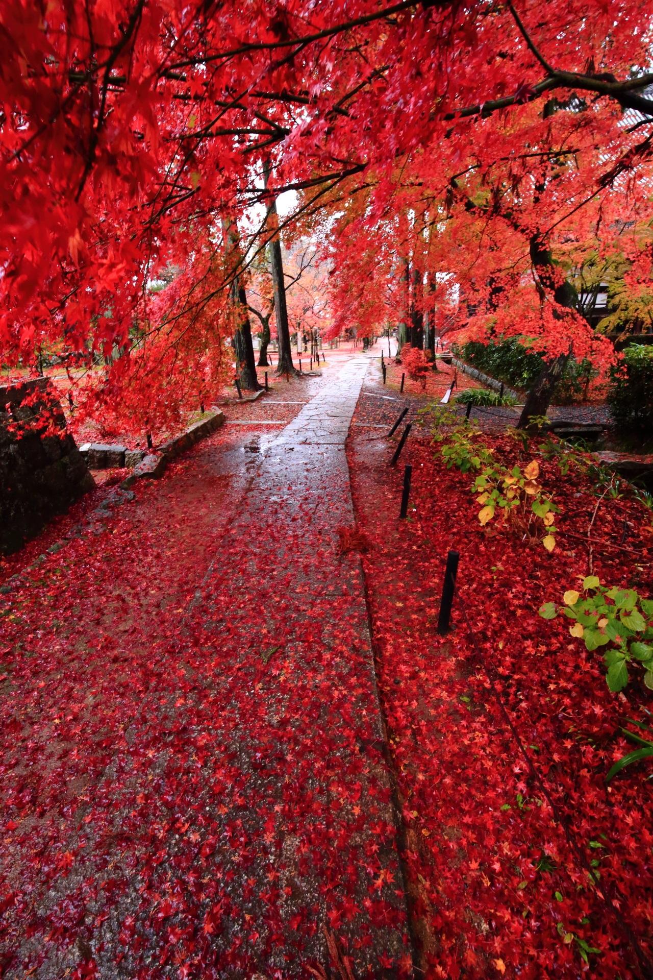 雨が送ってくれた真っ赤な紅葉の空間