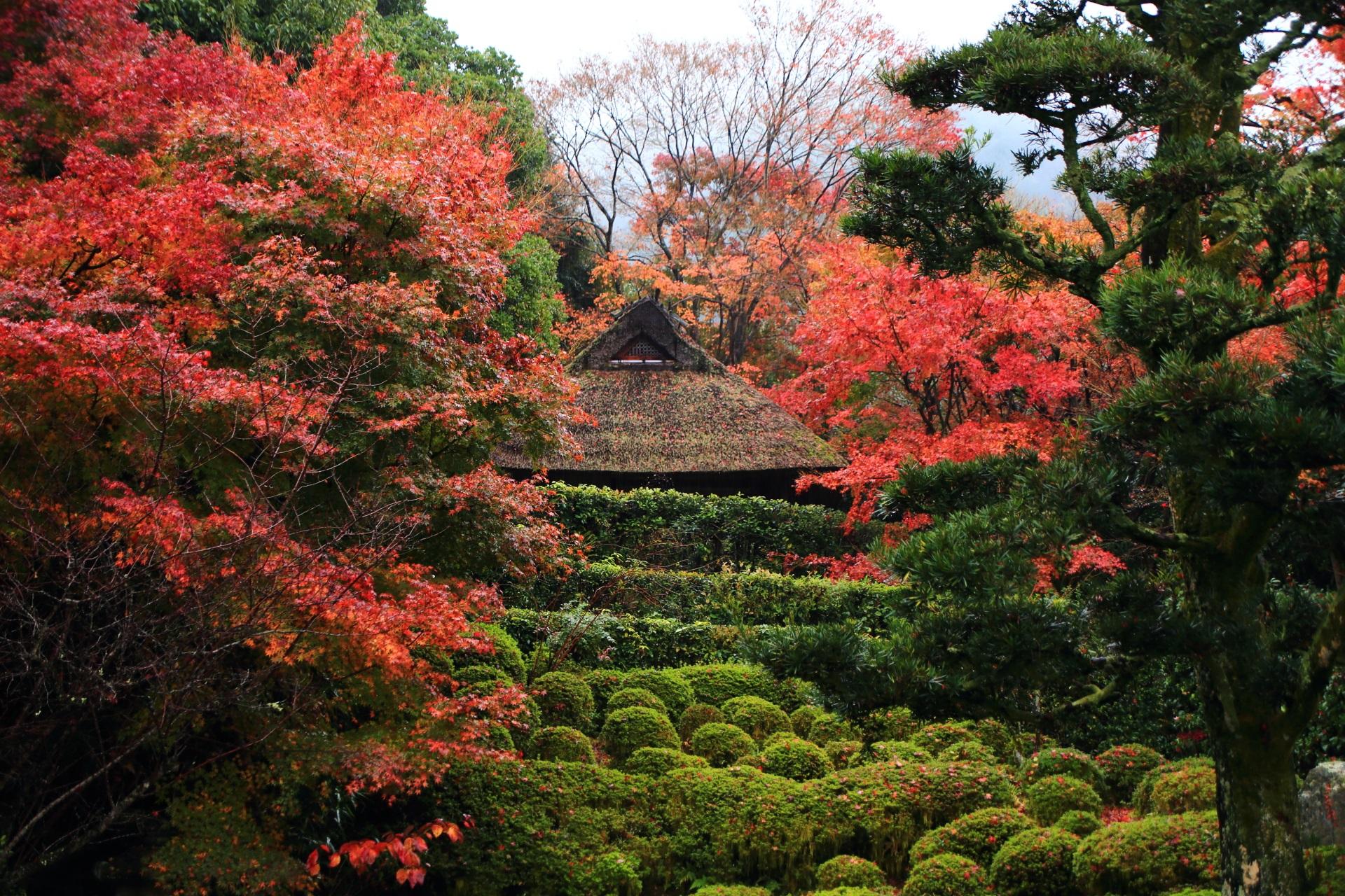 金福寺の芭蕉庵と溢れる紅葉