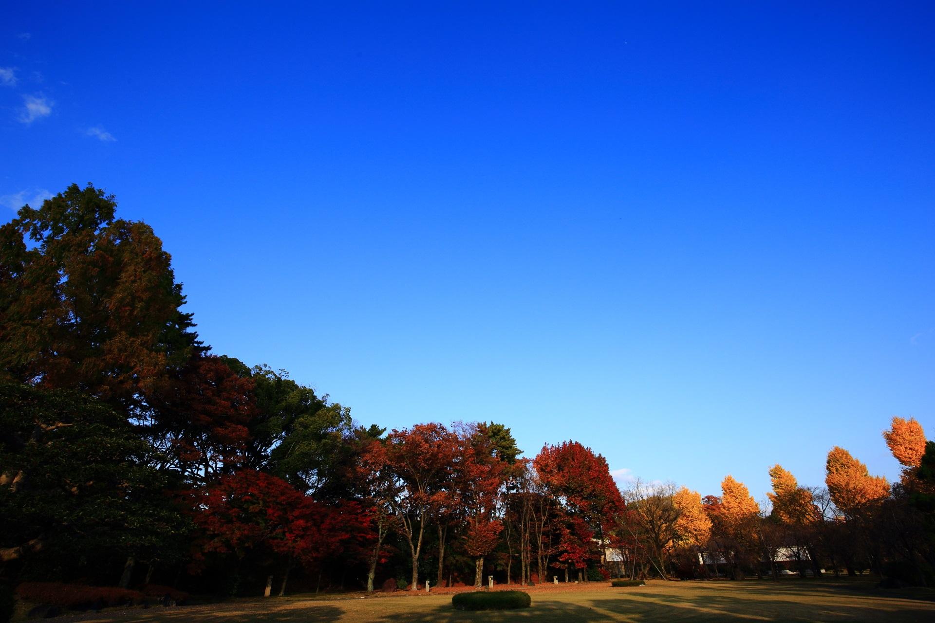紅葉と銀杏をつつむ絶品の青空