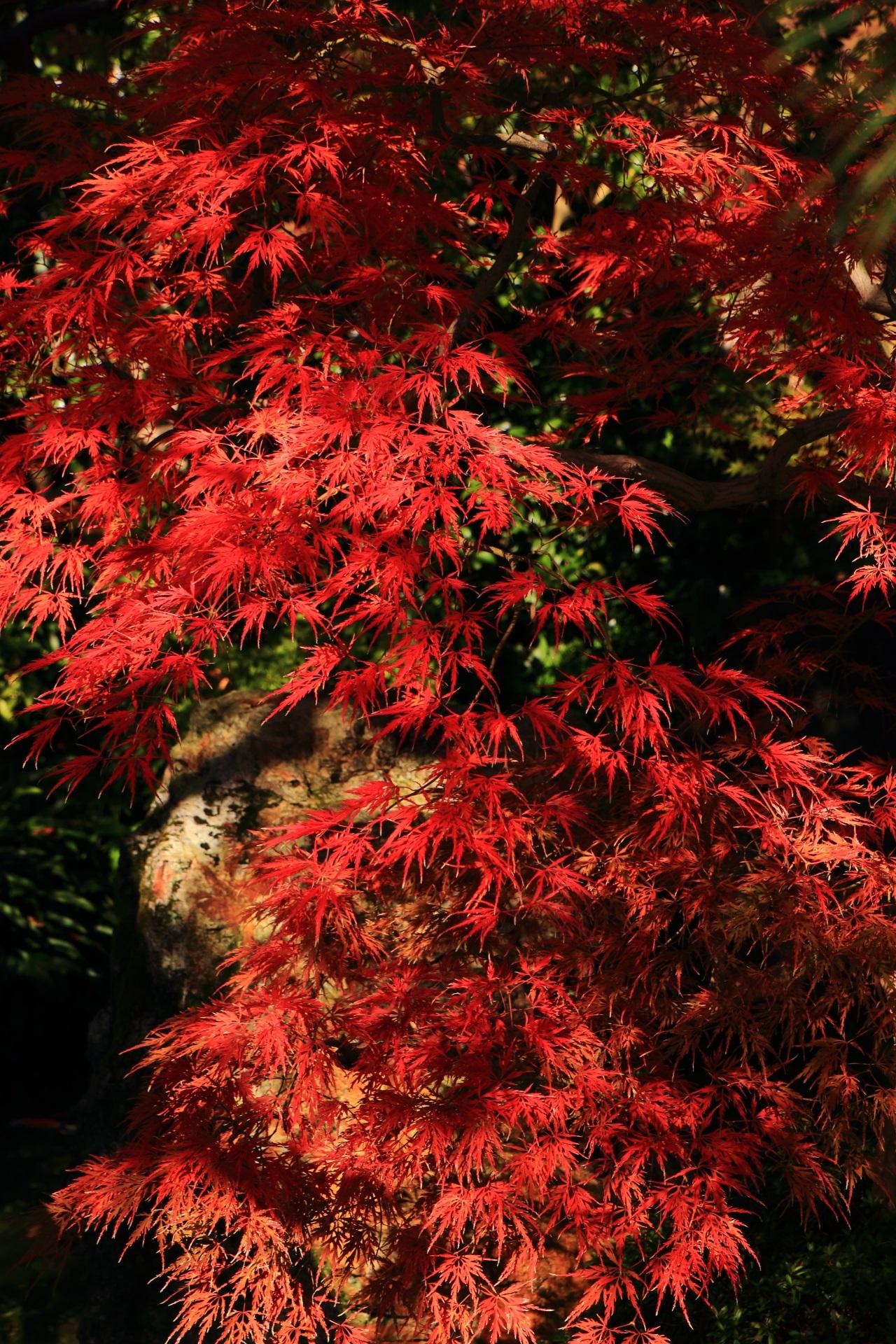 木漏れ日が彩る絶品の秋色の輝き