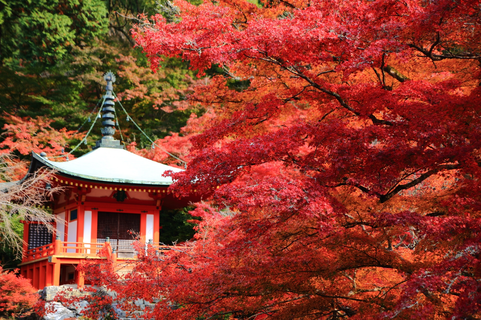 豪快に色づく真っ赤な紅葉と弁天堂