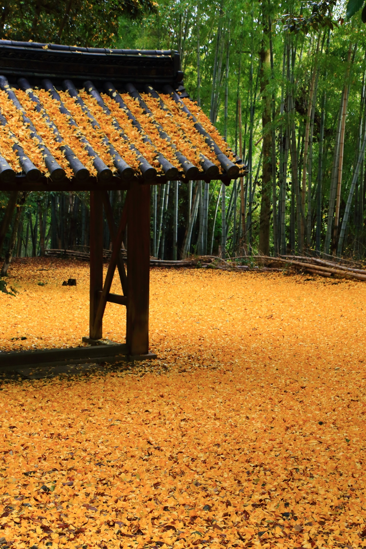 Kyoto Yamazaki-shoten Temple ginkgo