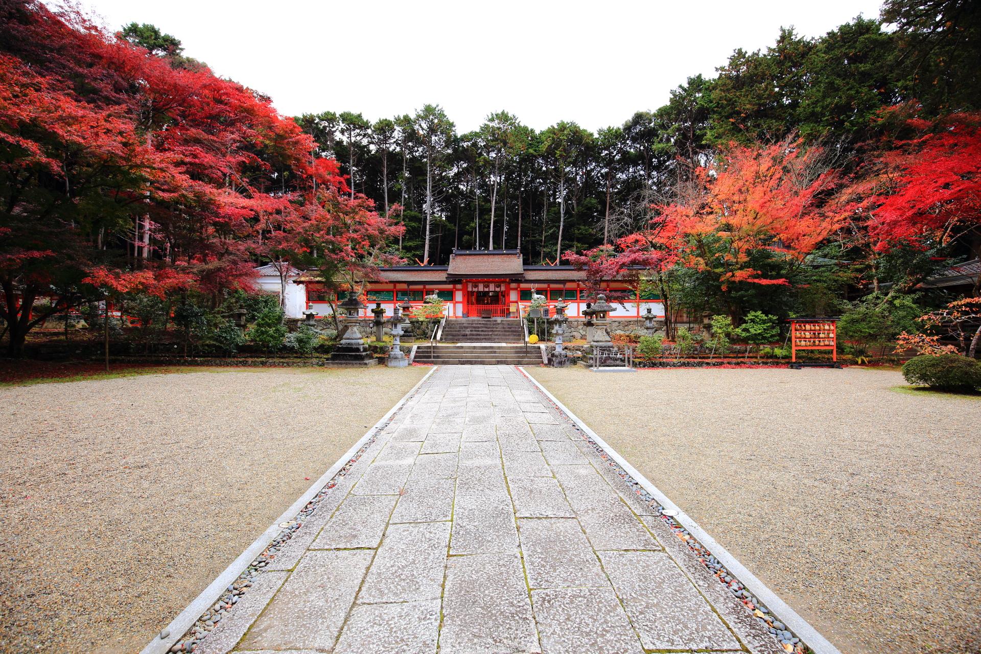 大原野神社の絵になる見事な秋の風景