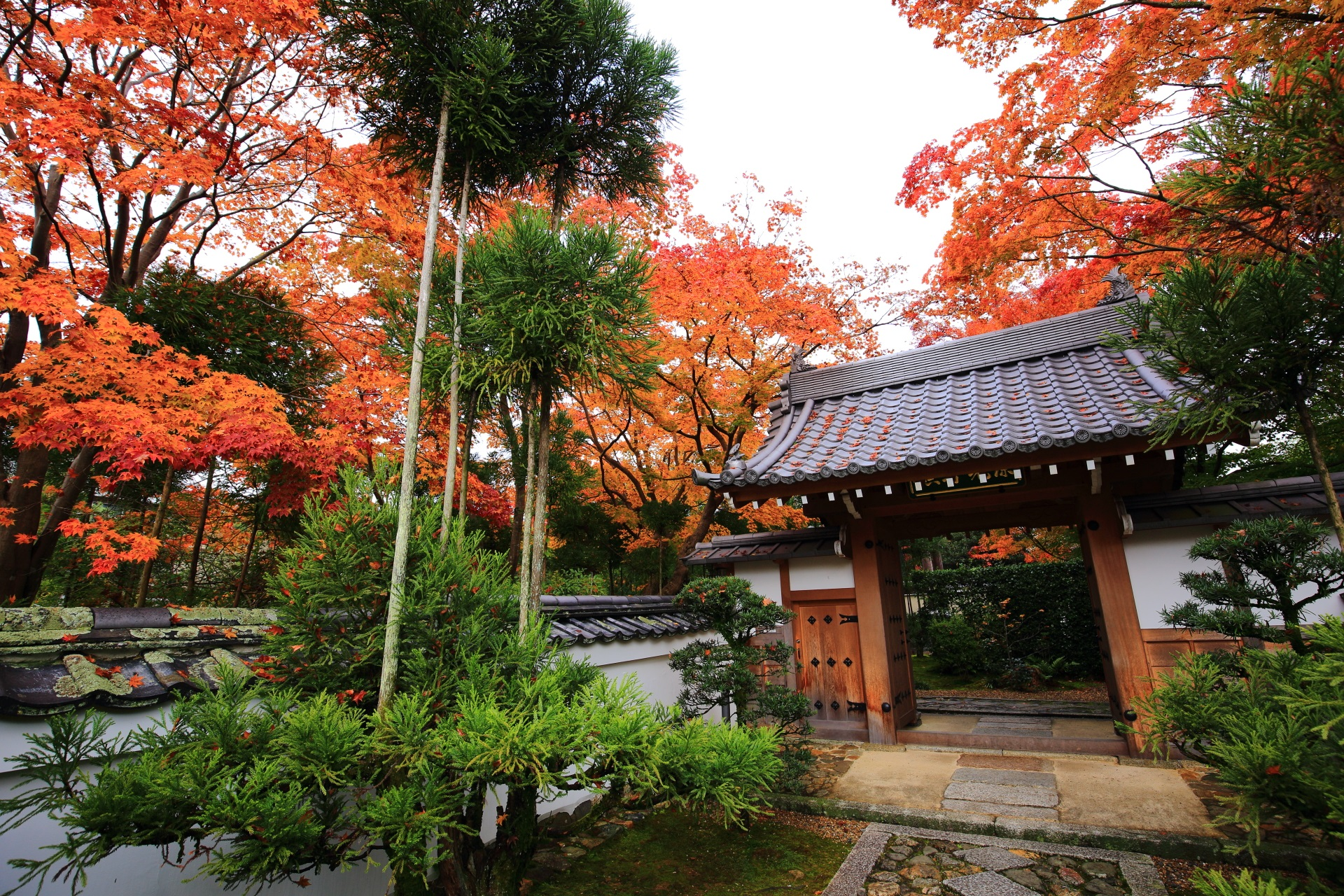 柔らかな紅葉につつまれた源光庵の表門