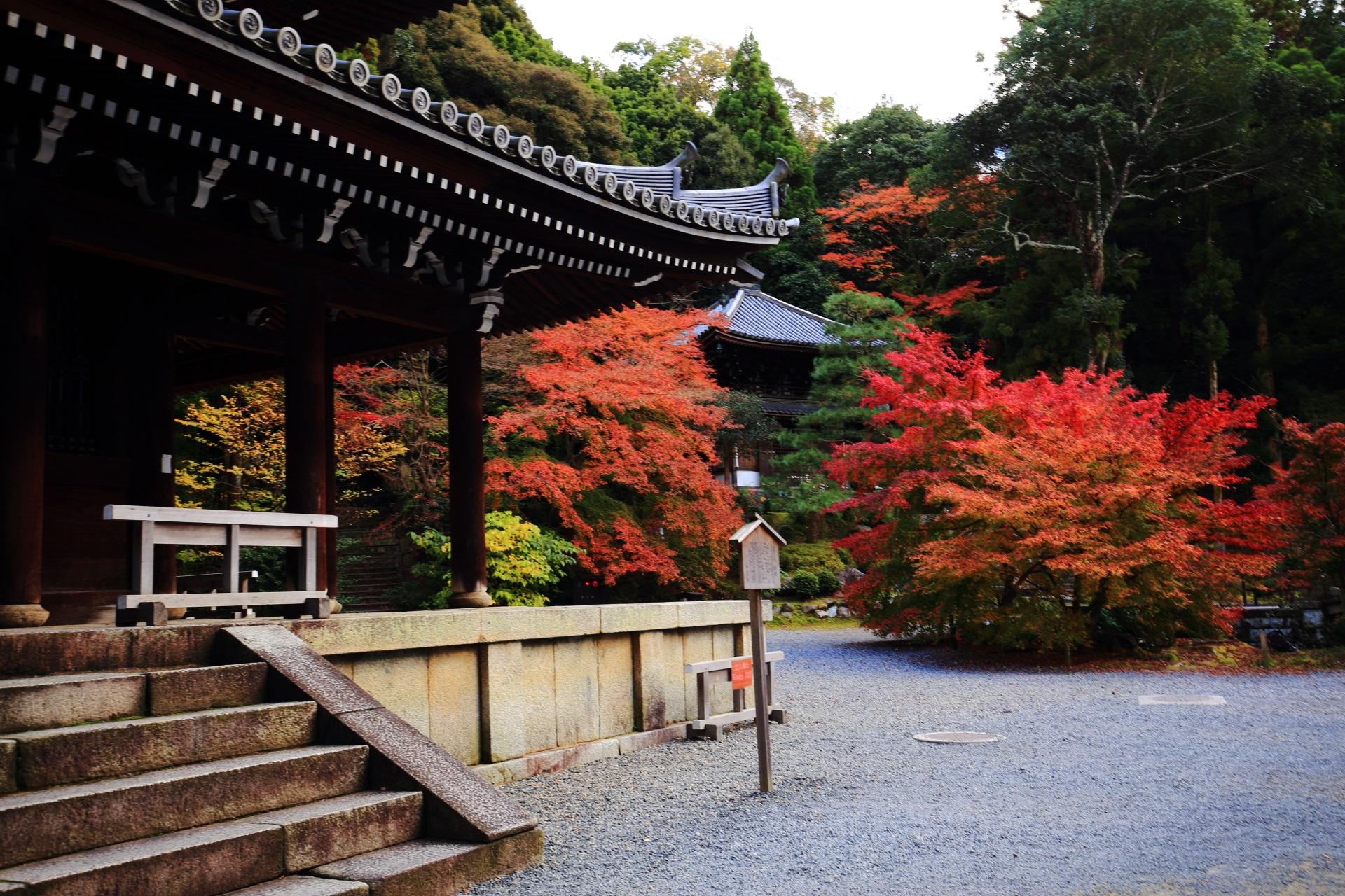 知恩院の経蔵と納骨堂を華やぐ極上の紅葉