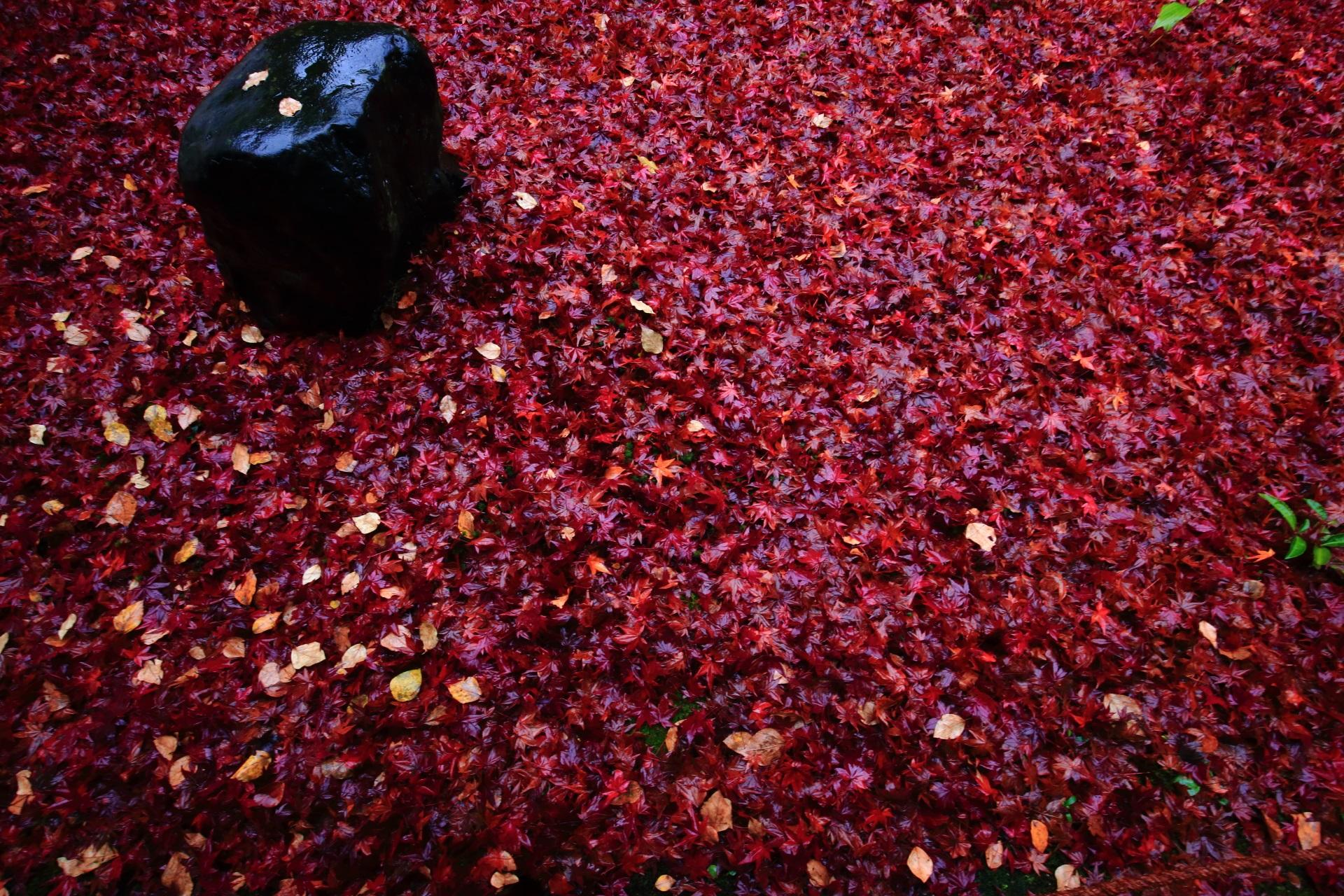 金福寺の凄すぎる圧倒的な散紅葉や敷紅葉