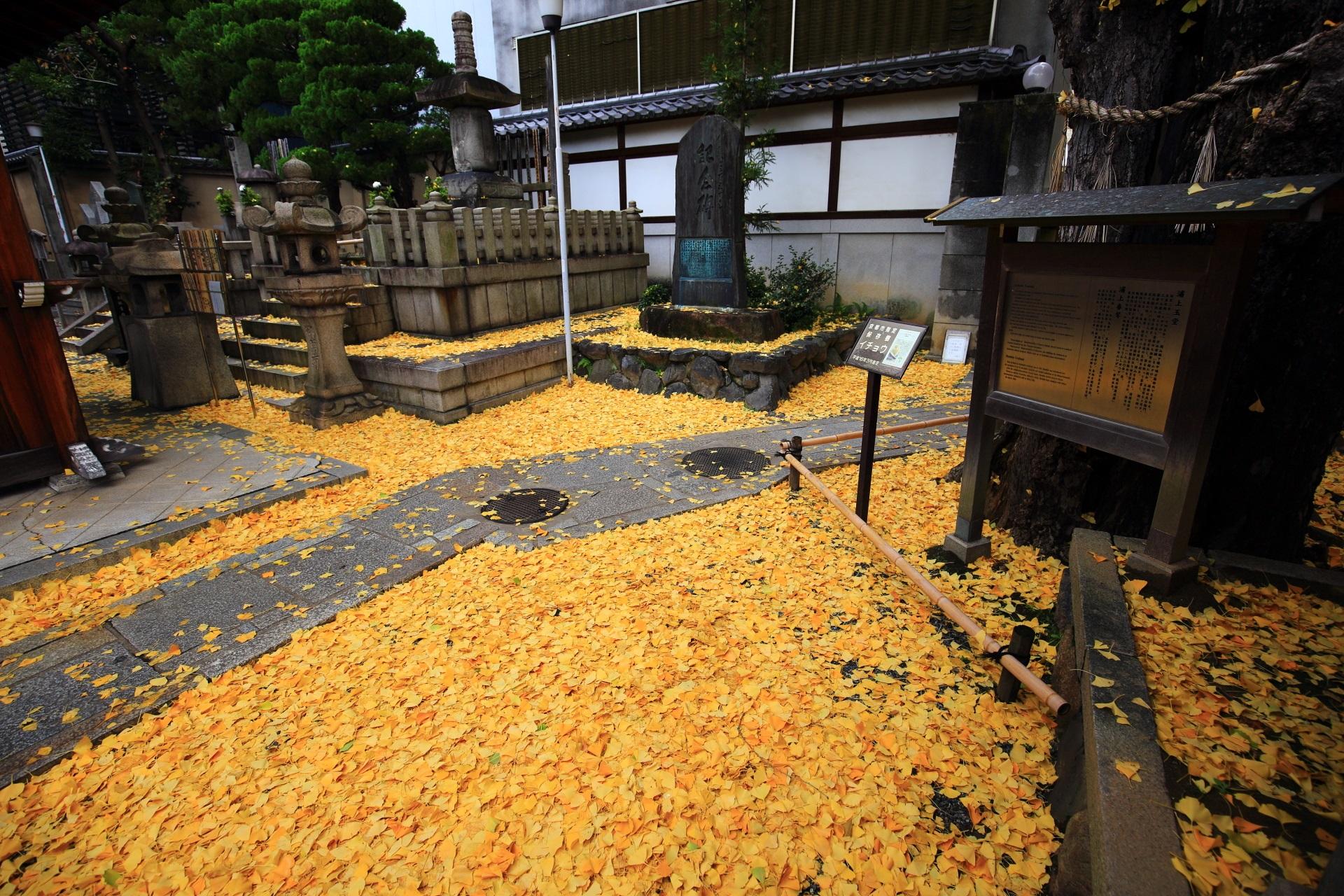 散り銀杏や敷き銀杏が見事な本能寺