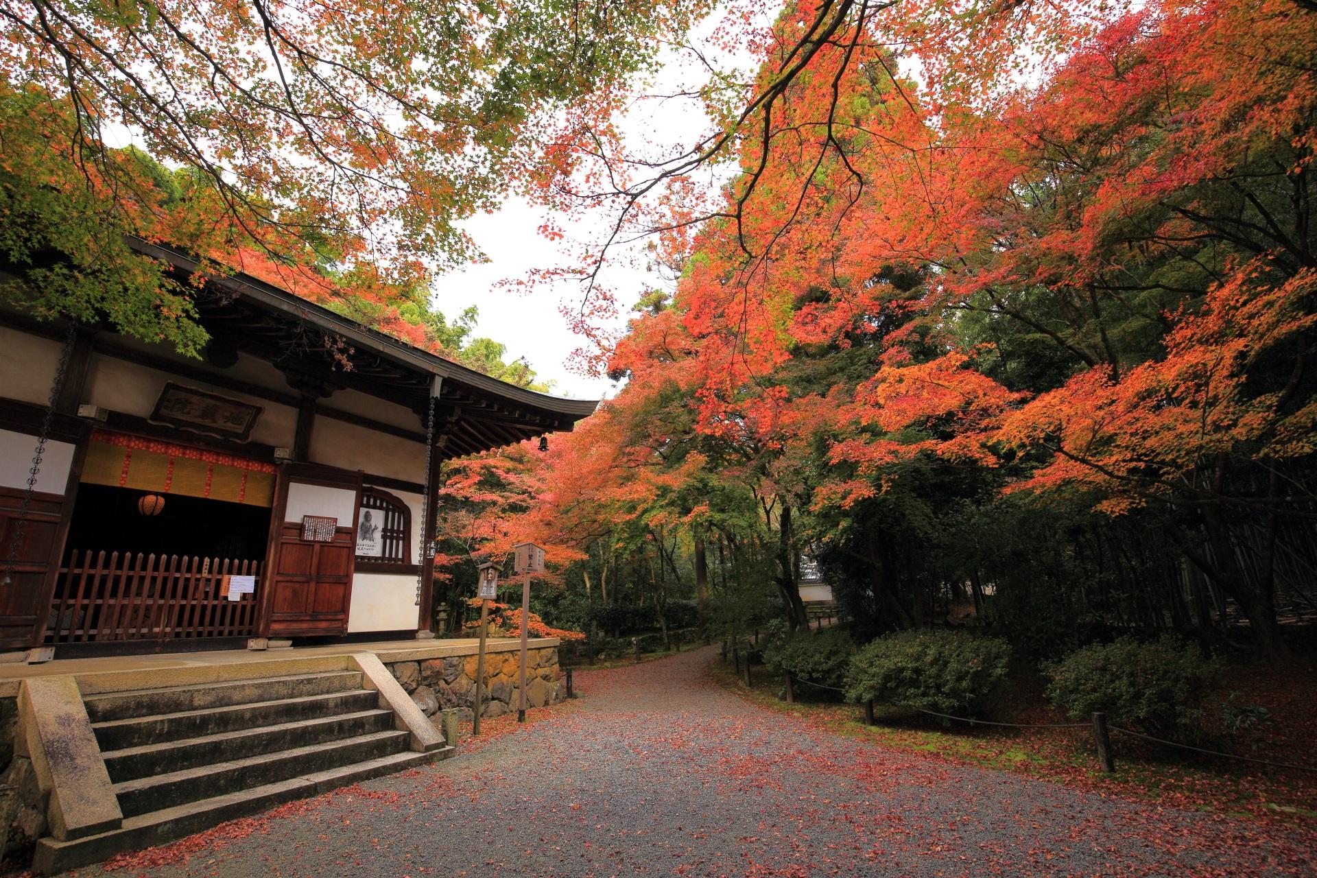 高画質 写真 竹の寺 地蔵院 紅葉