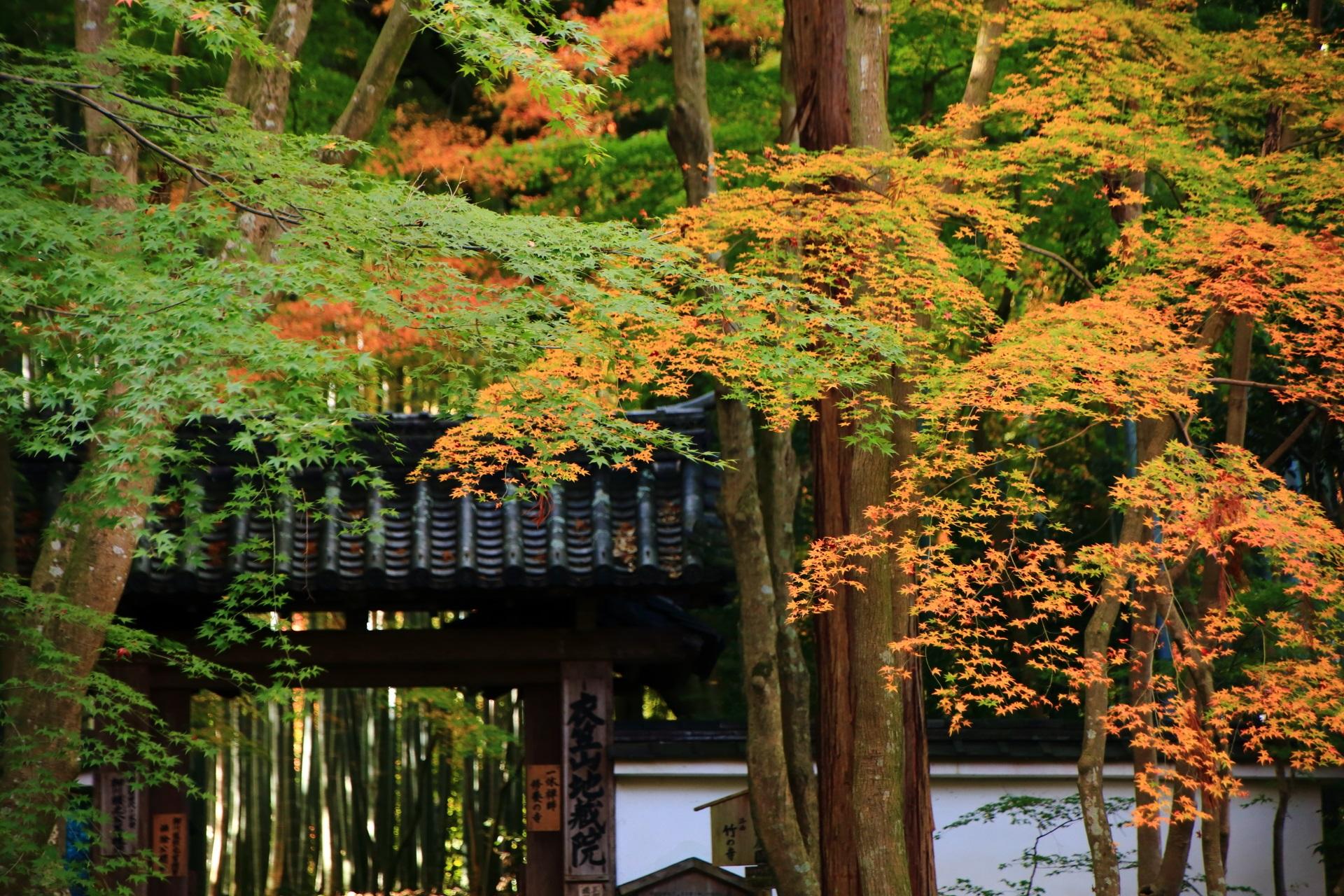 秋の風情を感じられる地蔵院の紅葉