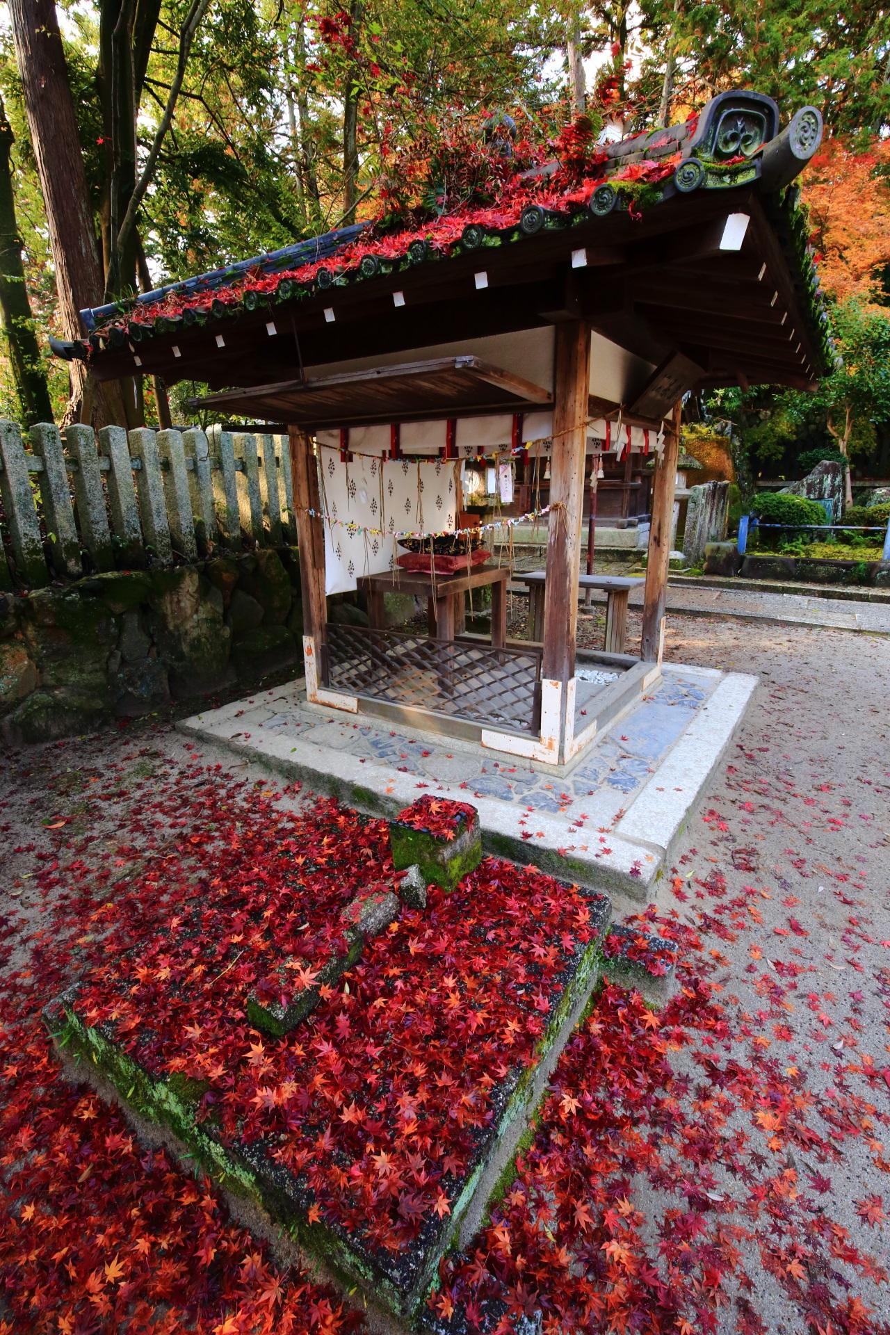 願いの叶う阿呆賢さんと鮮烈な散り紅葉