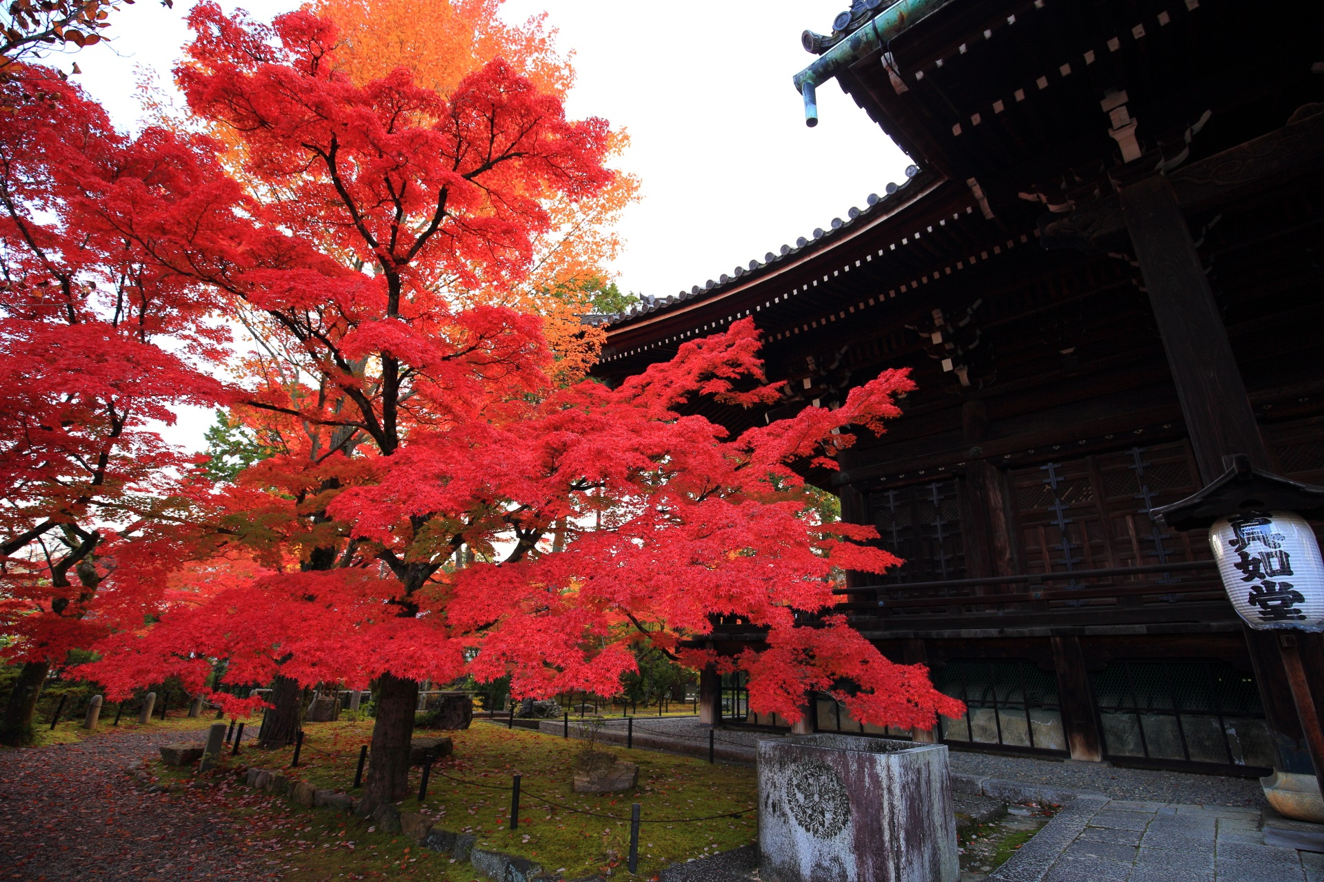 境内の至るところで多彩な紅葉が溢れる真如堂