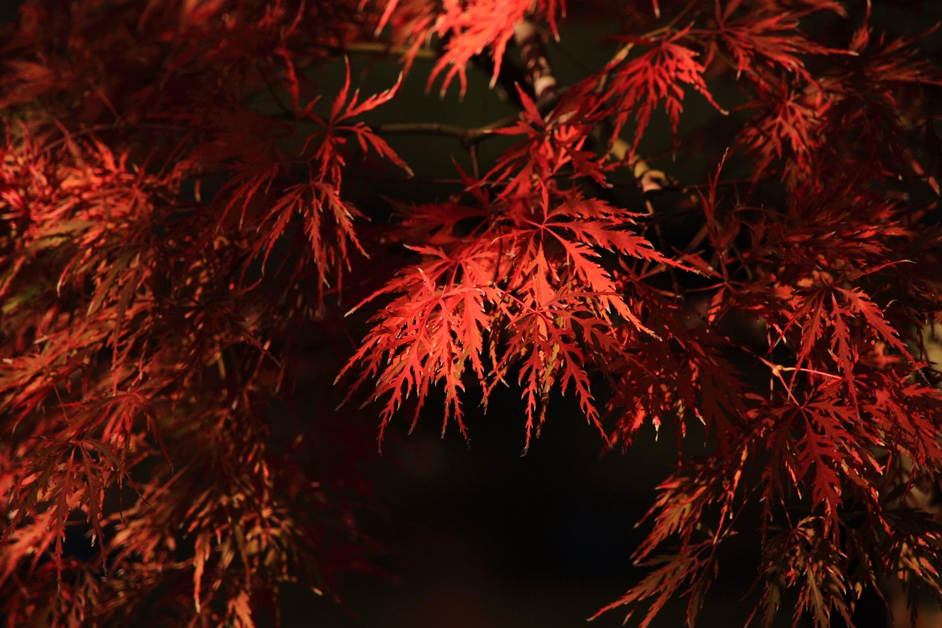 鮮やかな秋色につつまれる城南宮