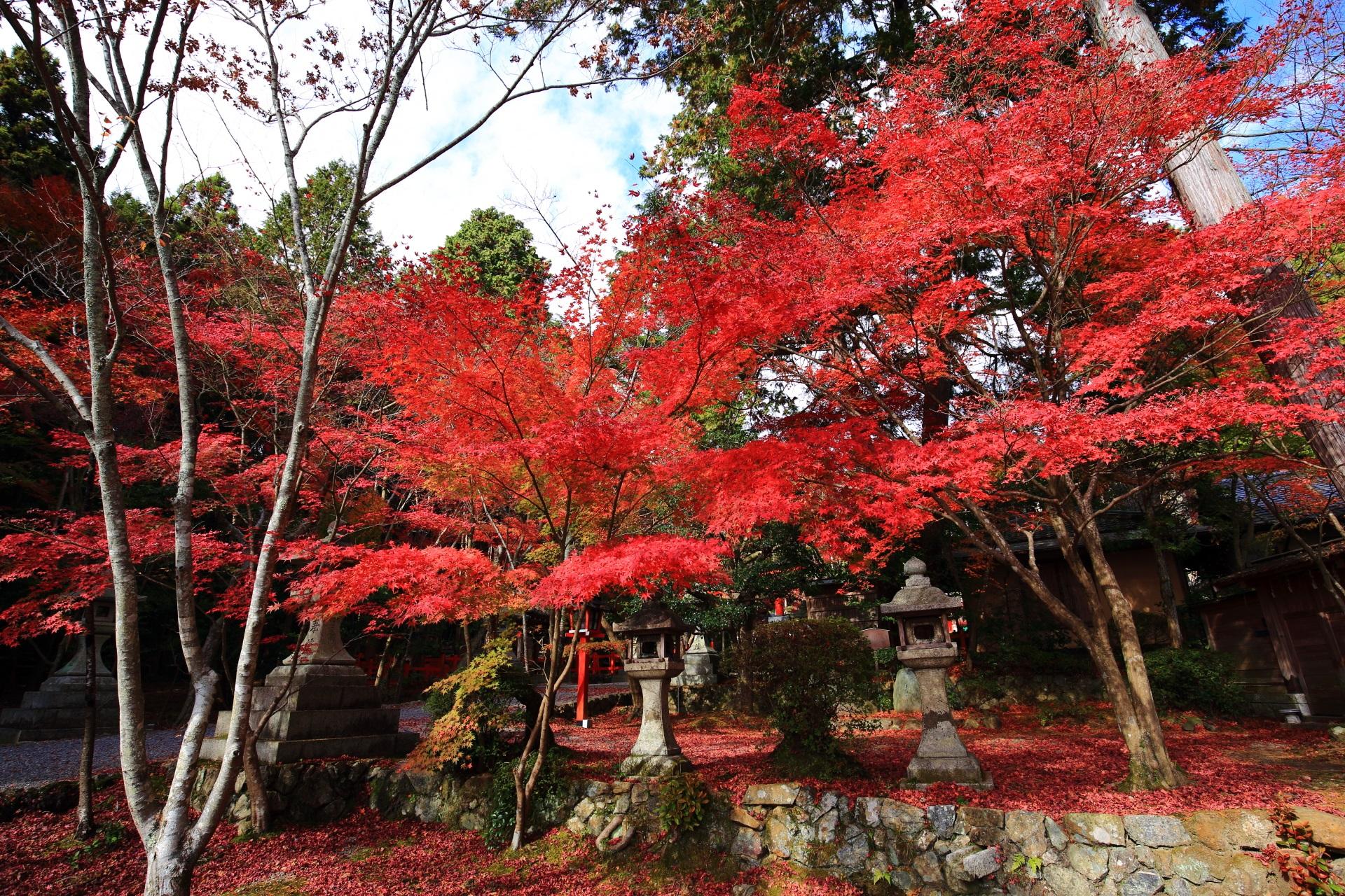 大原野神社の日を浴びて煌く真っ赤な紅葉