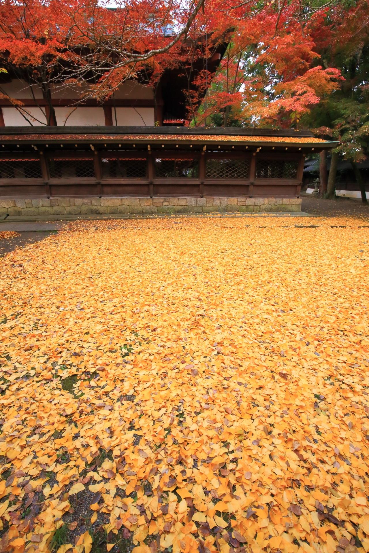 散り銀杏と紅葉の隠れた名所の上御霊神社