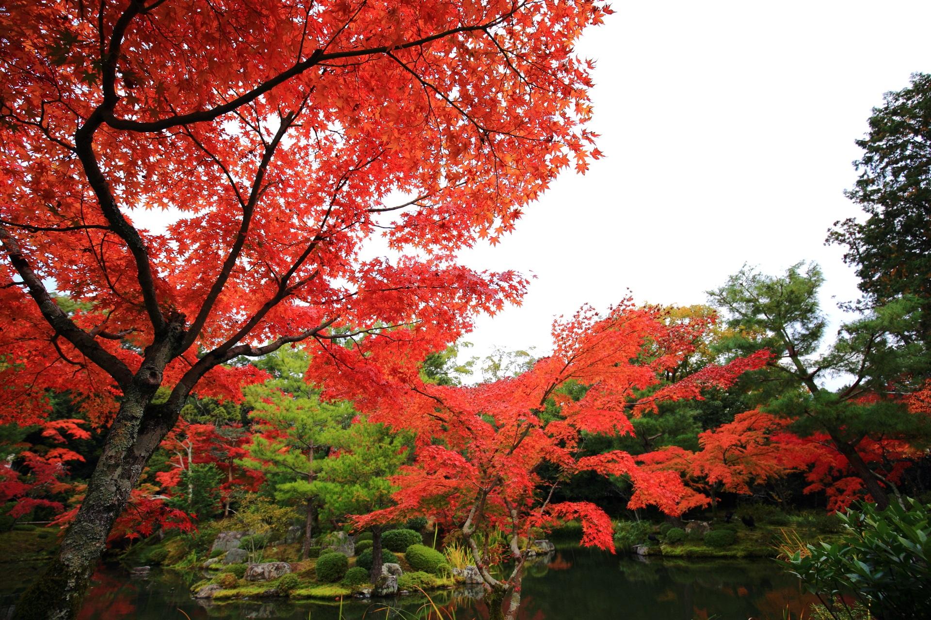 庭園と水辺を優雅に染める多彩な紅葉