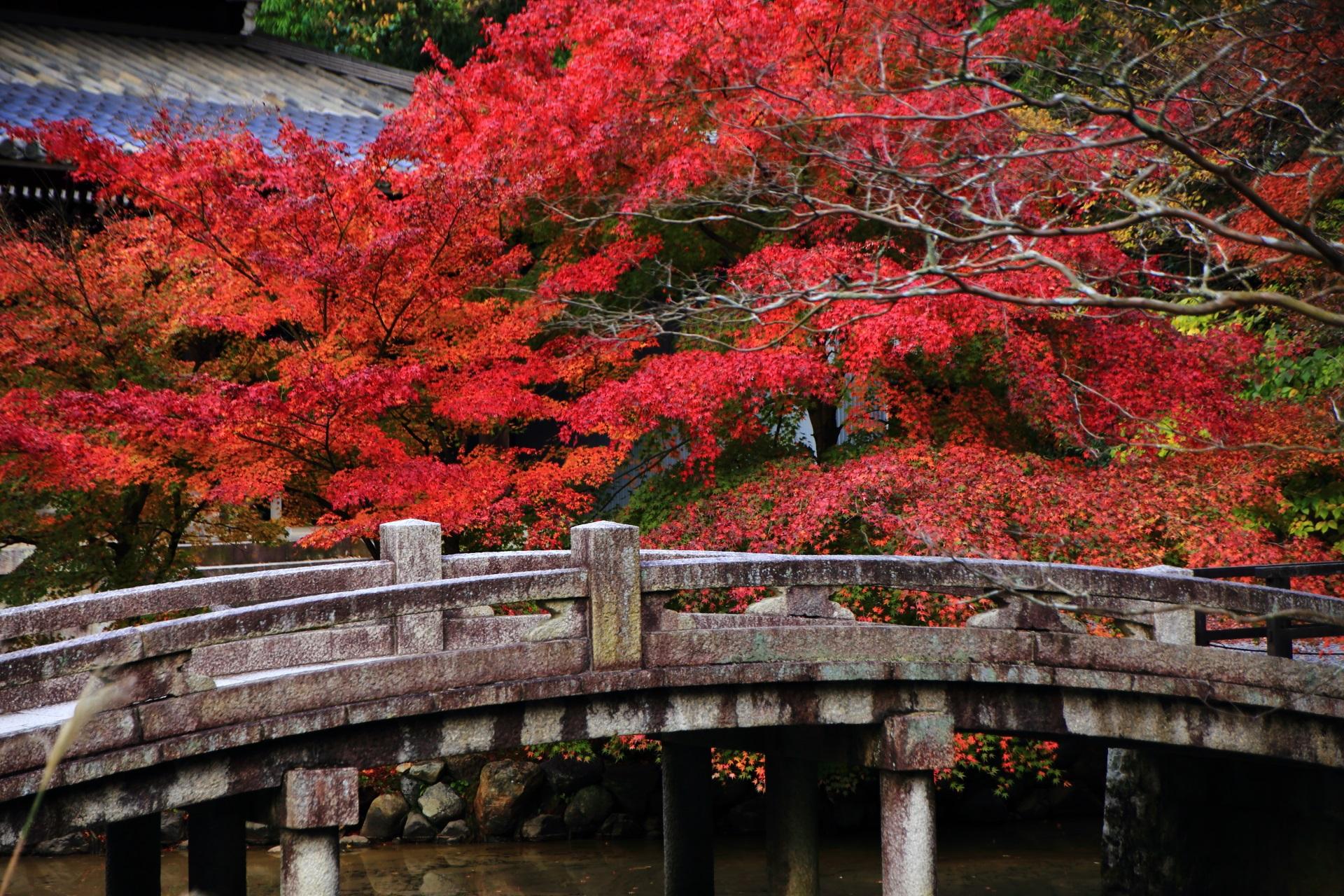 知恩院の石橋を彩る絶品の紅葉