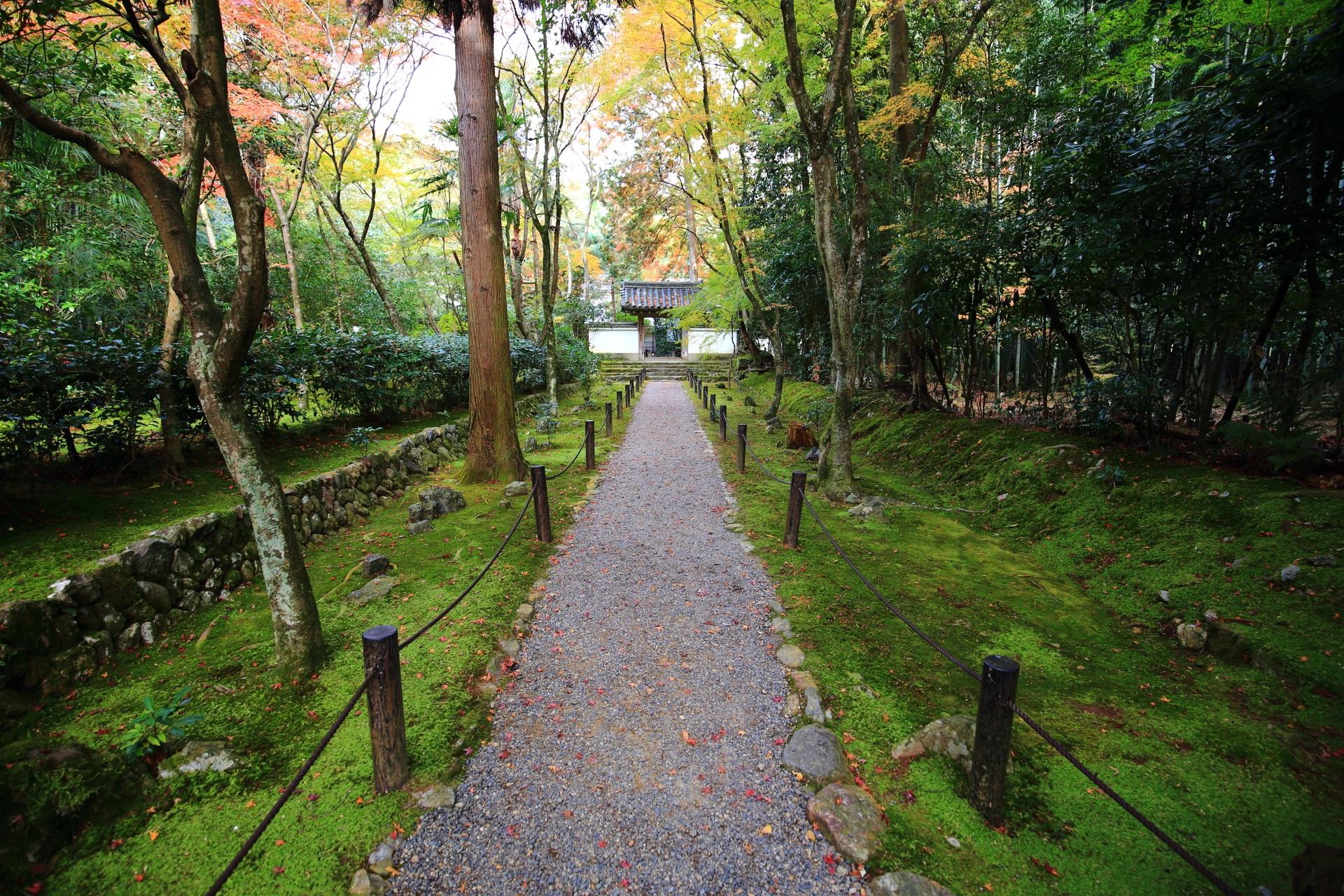 竹の寺地蔵院の風情たっぷりの方丈に続く苔につつまれた参道