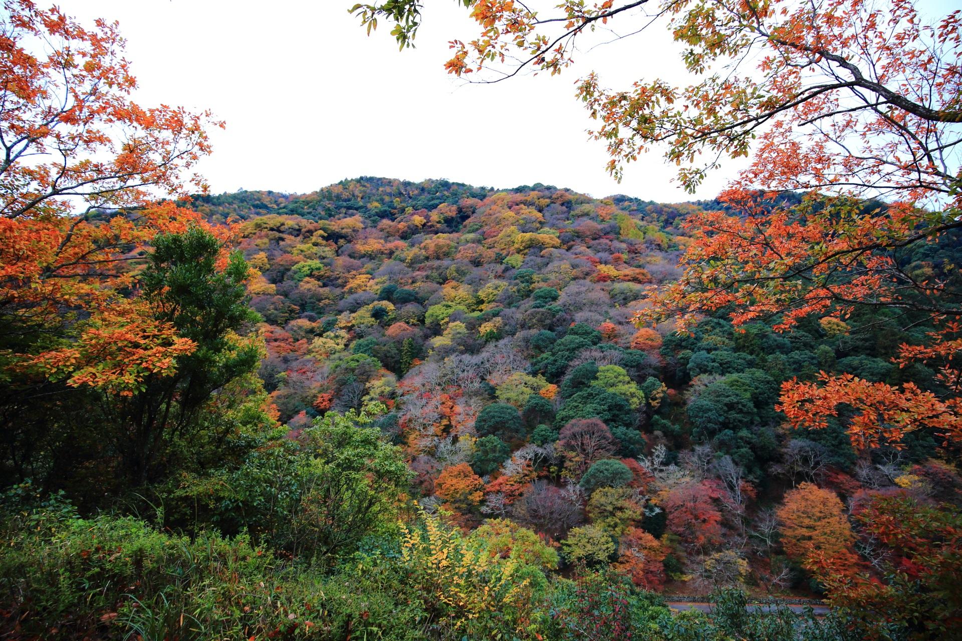 秋色の嵐山を彩る華やかな紅葉