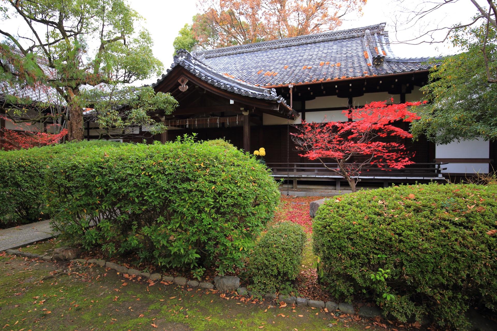 上御霊神社の落ち着いた緑の中で華やぐ赤い紅葉