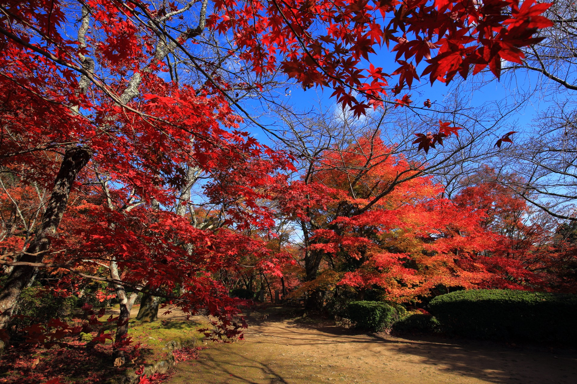 Kyoto Shiji-ji Temple autumn leaves