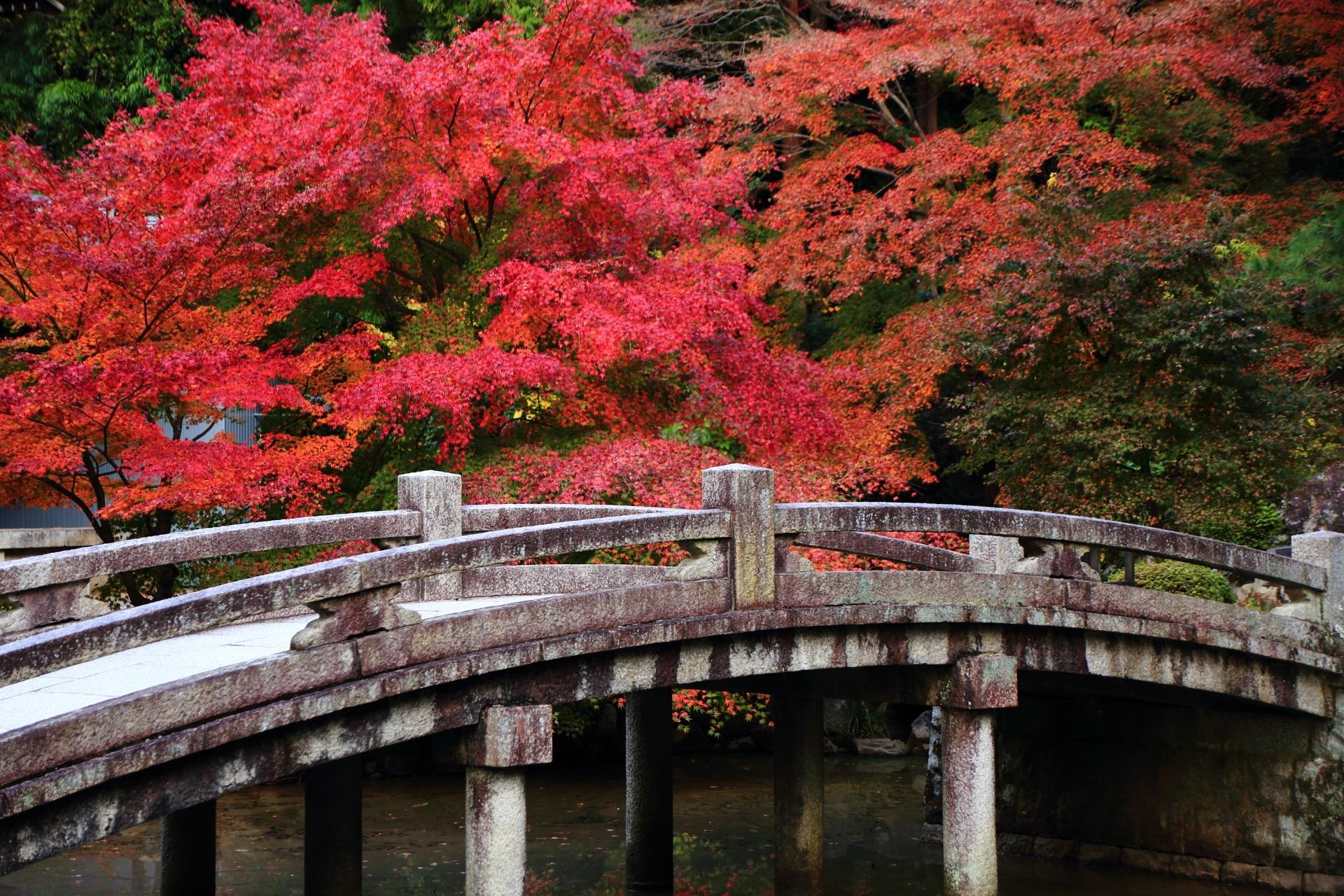 知恩院の風情ある景色を彩る華やかな紅葉