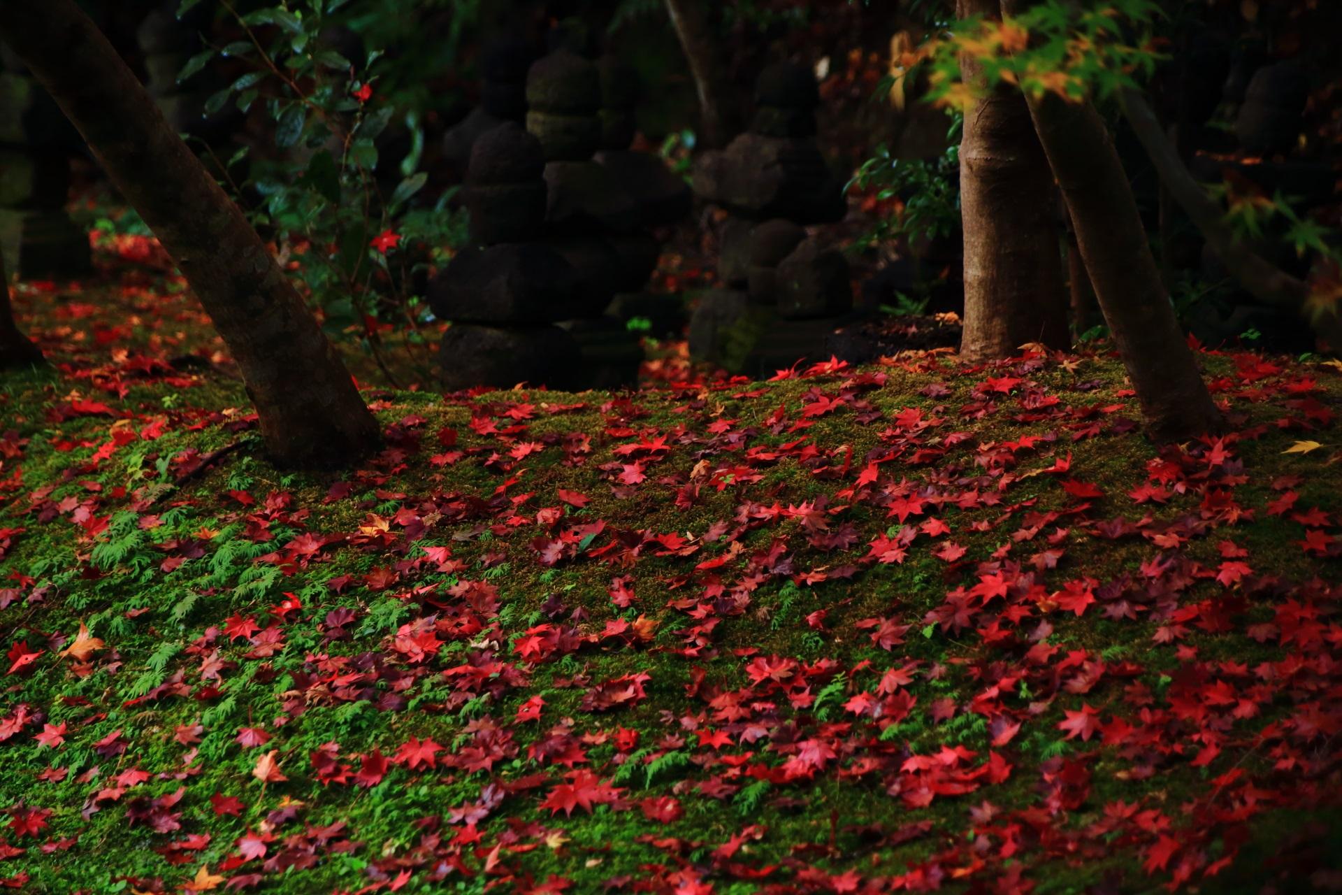 実相院の緑の苔を鮮烈に染める赤い散りもみじ