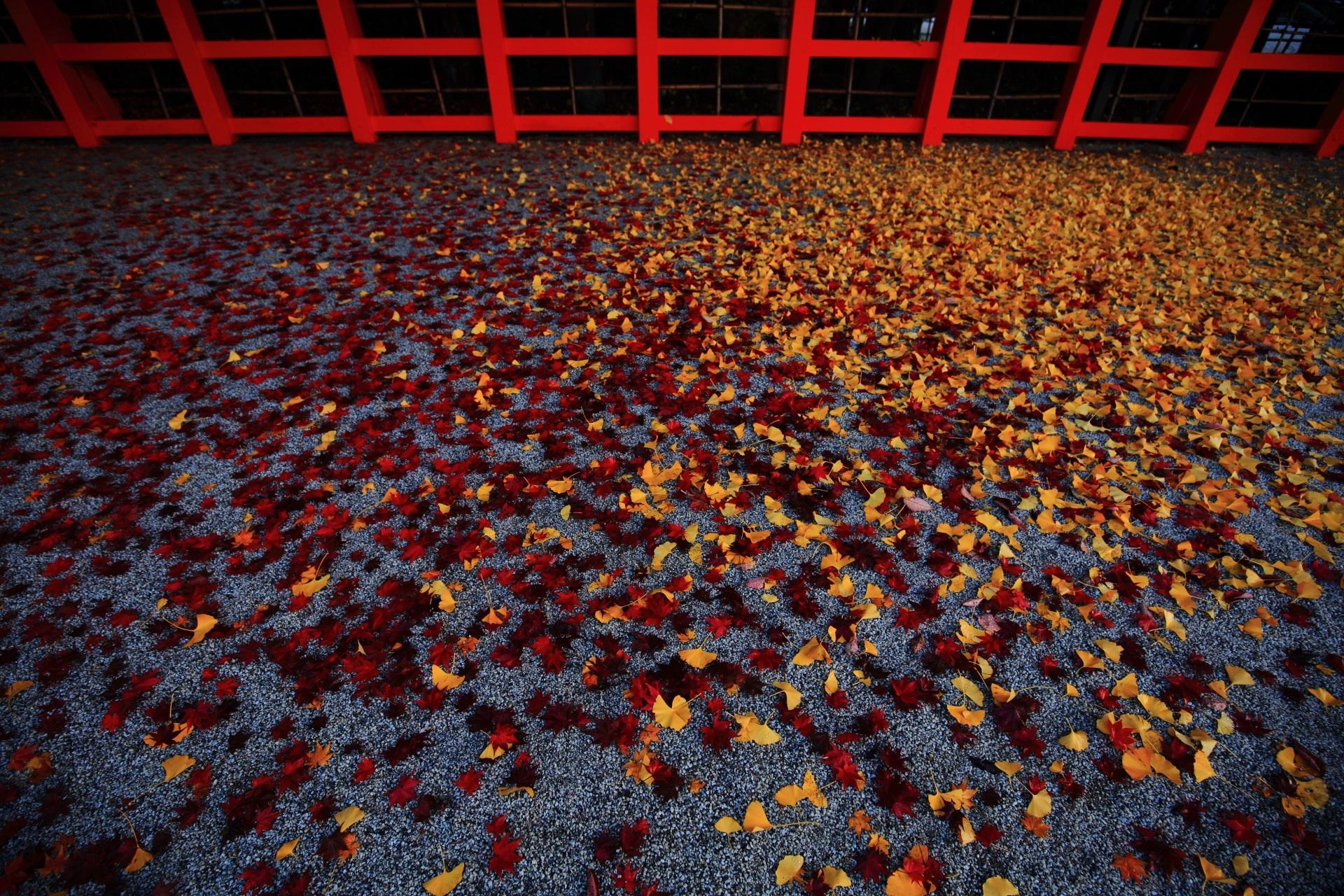 散り紅葉と散り銀杏の素晴らしい秋の贈り物