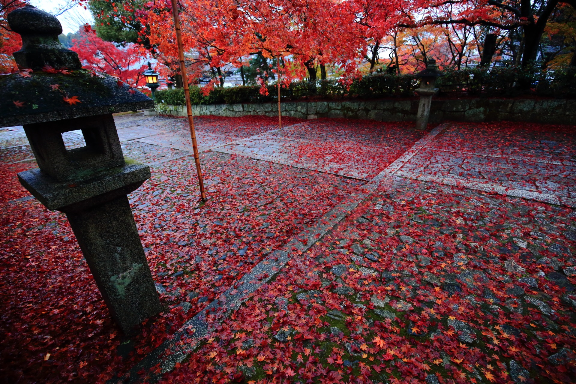 風情と華やかさを合わせ持つ圧巻の散り紅葉
