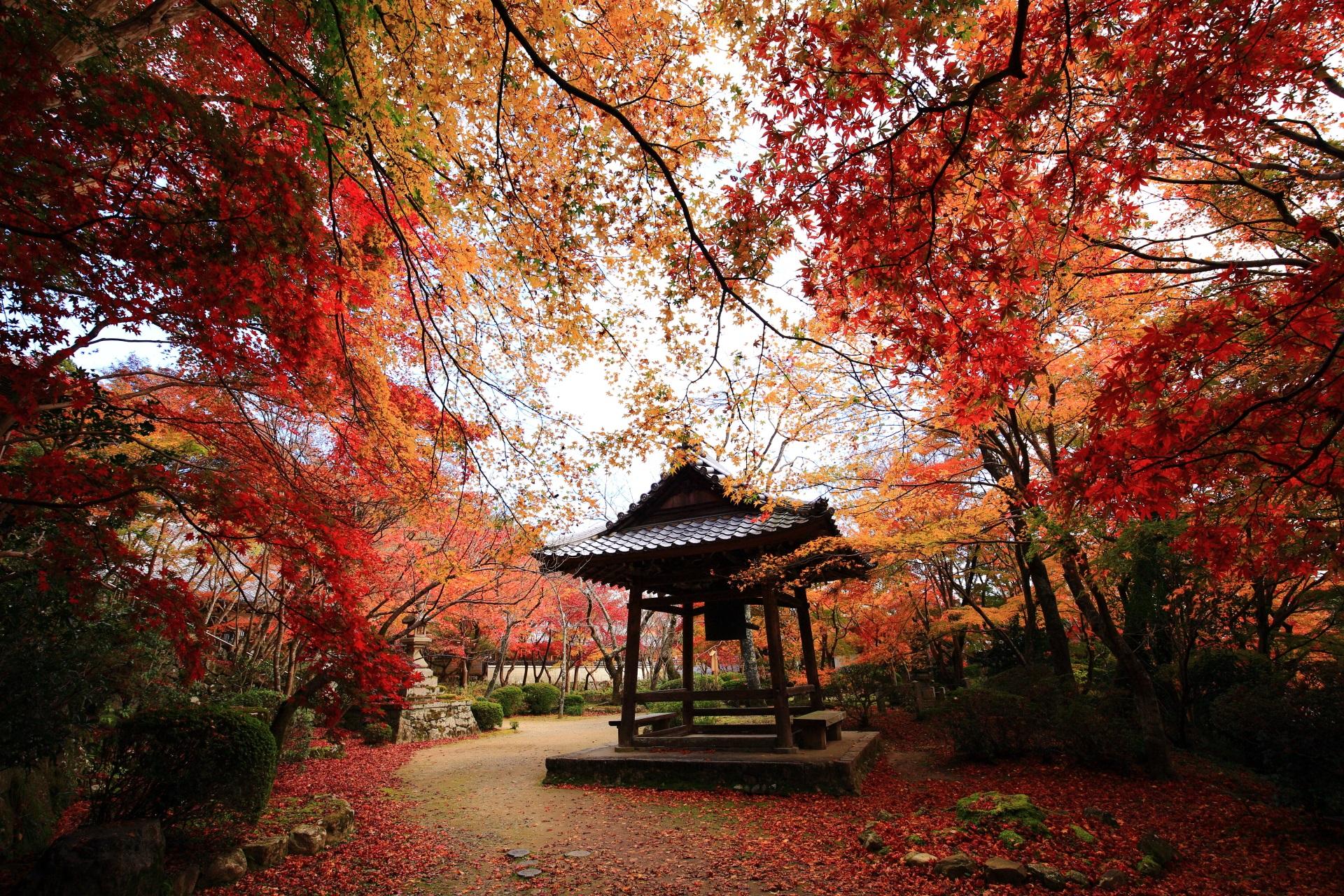 曇っている時の鐘楼を染める風情ある秋の彩り